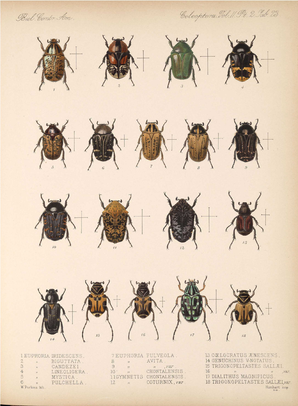 Beetles,  Image number:bca_12_02_02_473