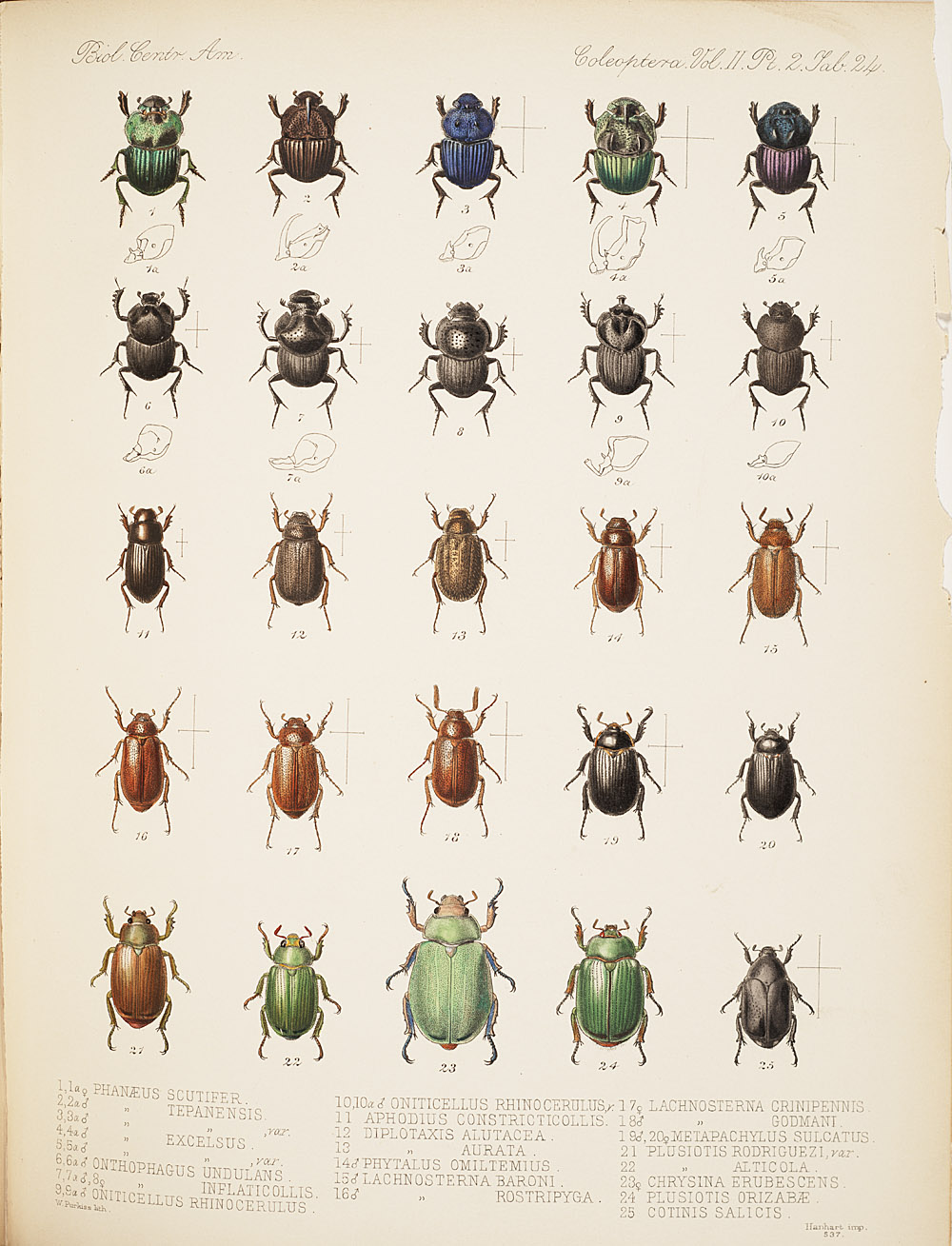 Beetles,  Image number:bca_12_02_02_474