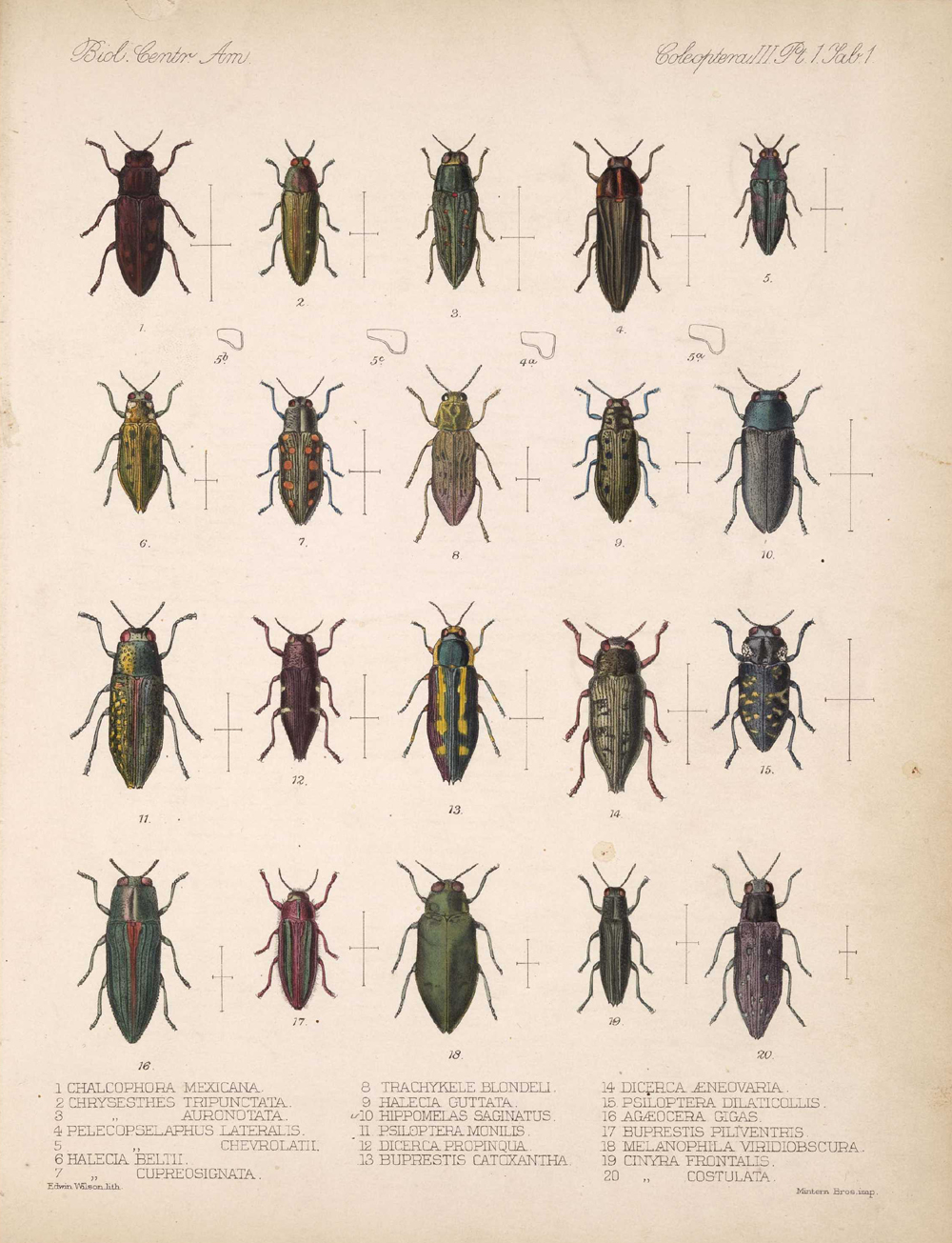 Beetles,  Image number:bca_12_03_01_713