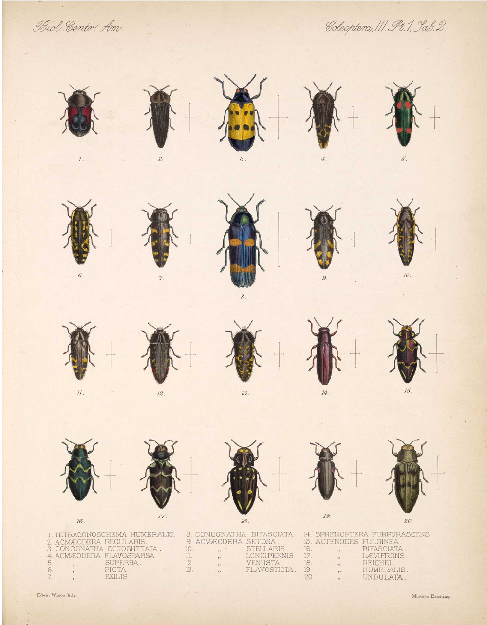 Beetles,  Image number:bca_12_03_01_714
