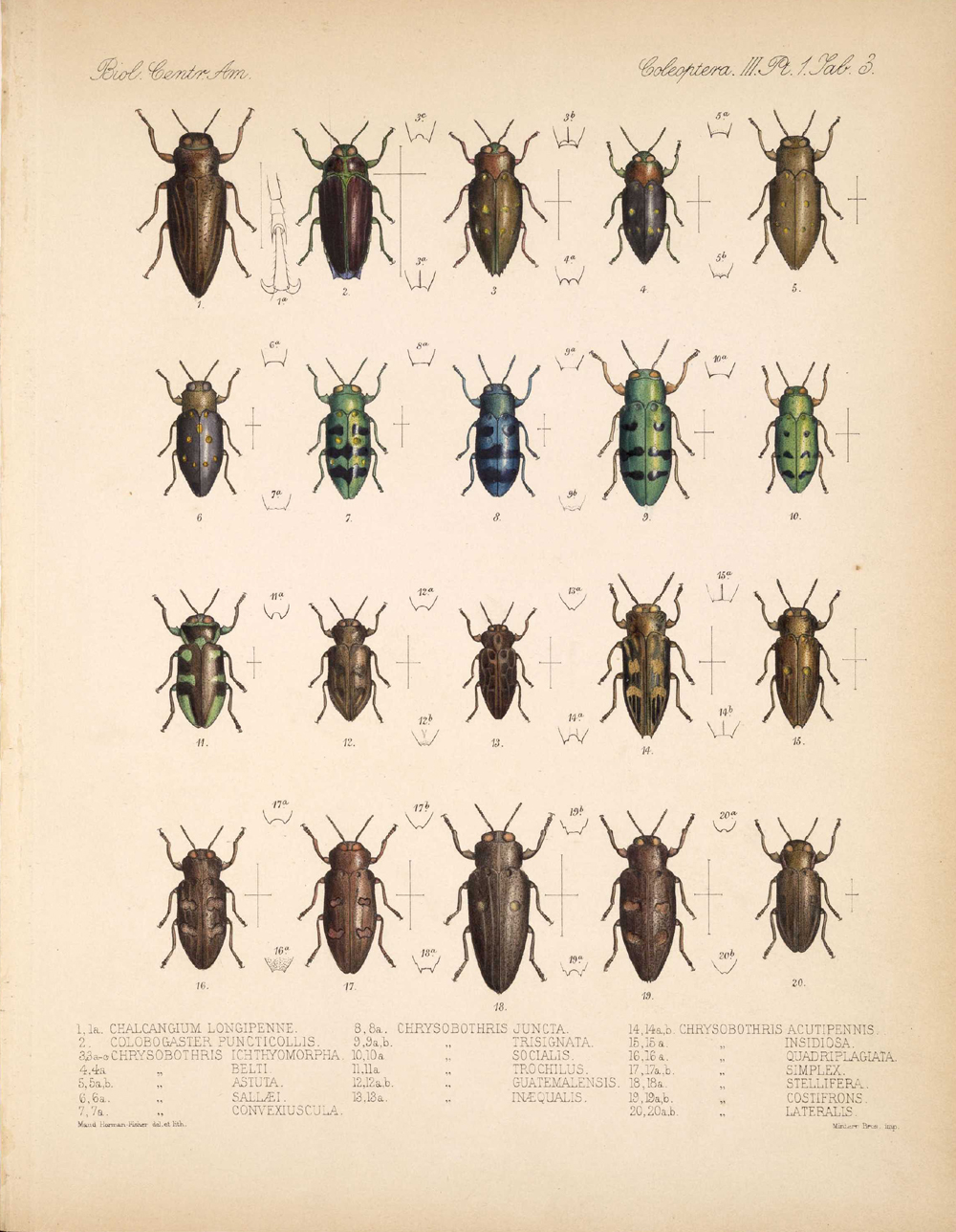 Beetles,  Image number:bca_12_03_01_715