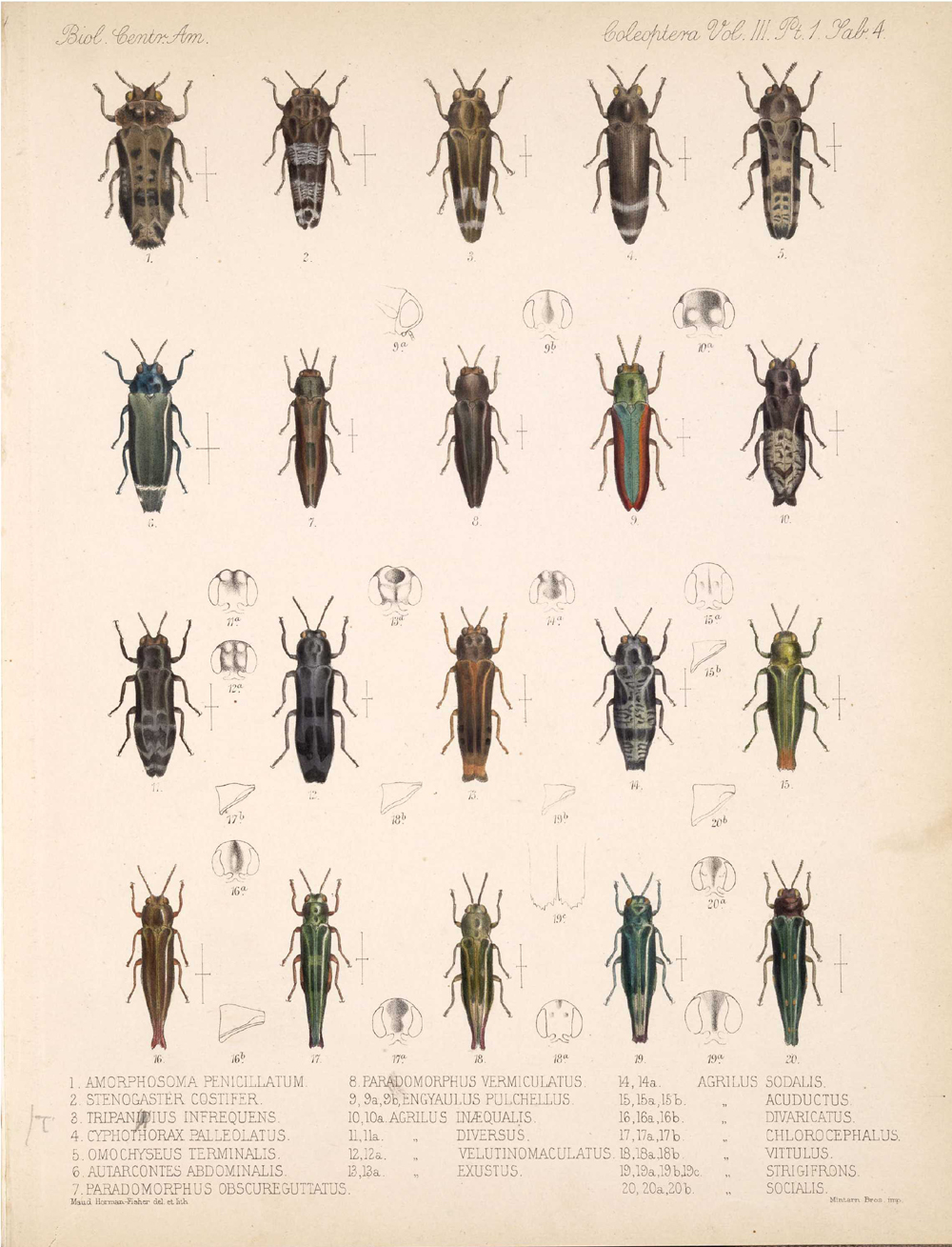 Beetles,  Image number:bca_12_03_01_716