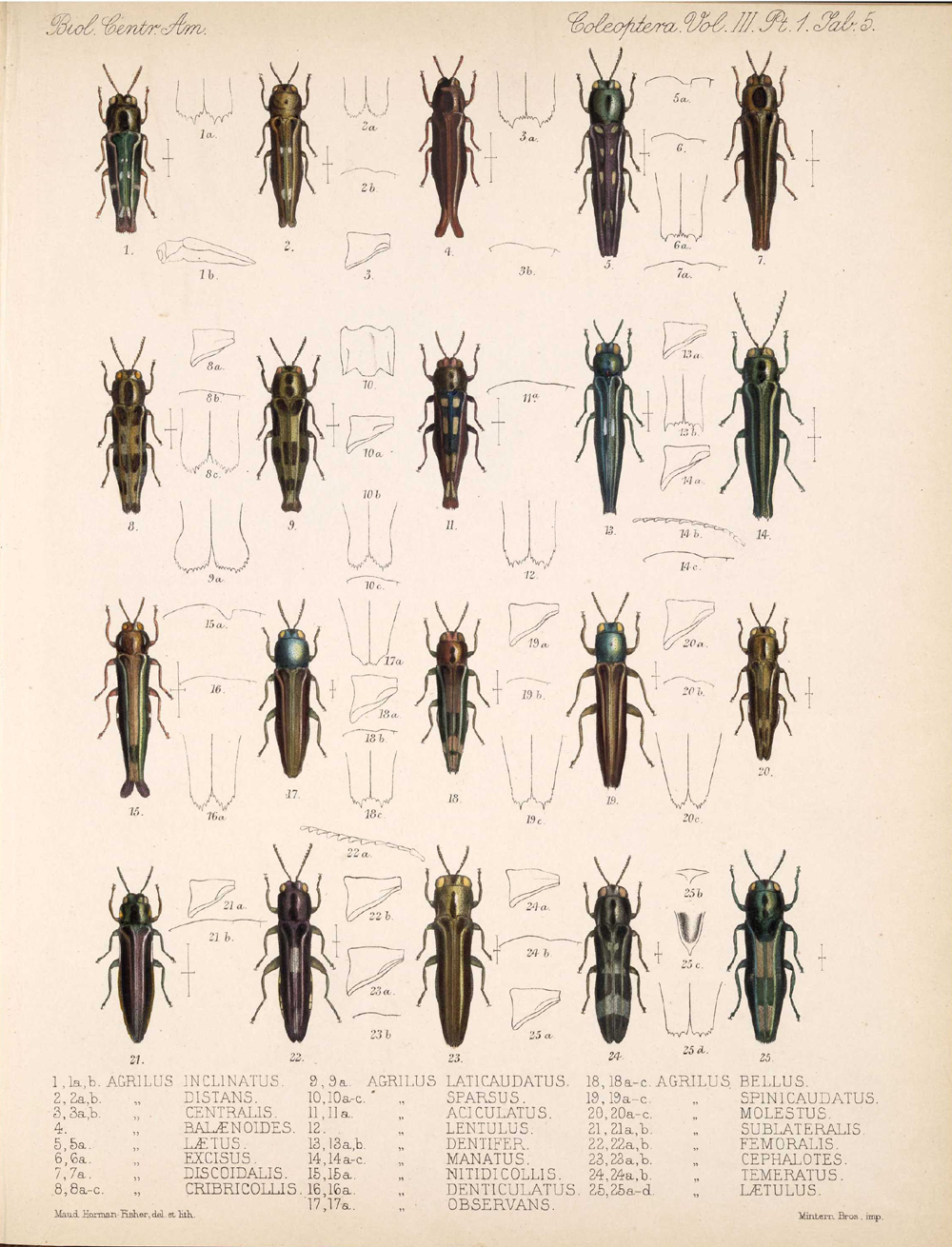Beetles,  Image number:bca_12_03_01_717