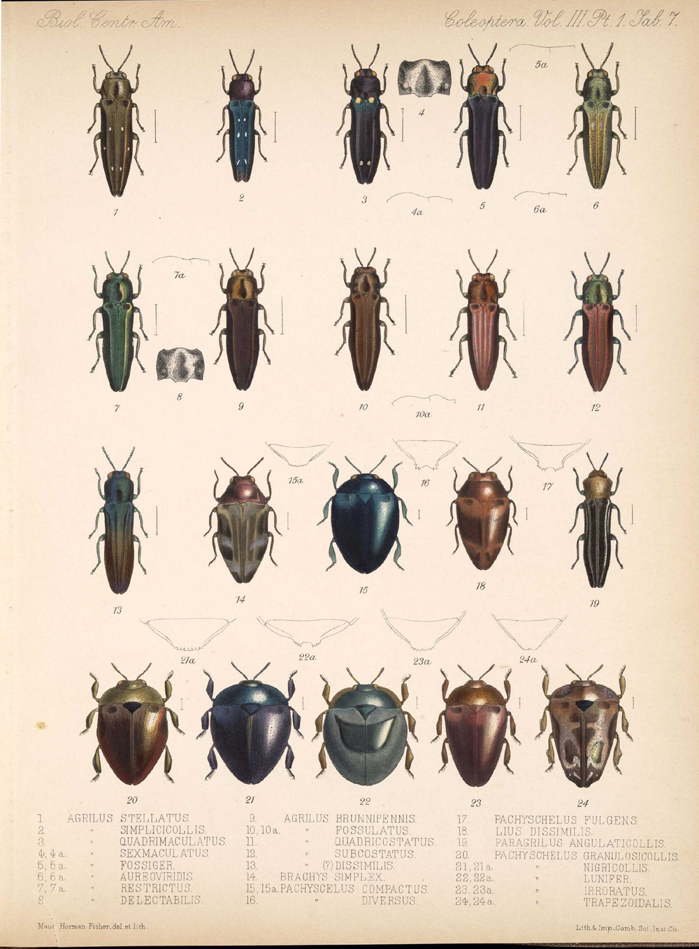 Beetles,  Image number:bca_12_03_01_719