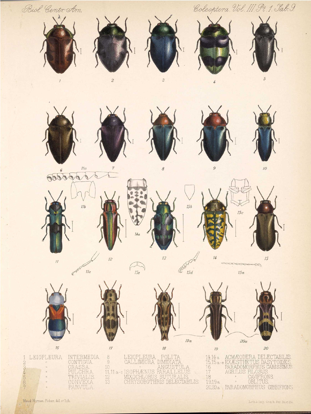 Beetles,  Image number:bca_12_03_01_721