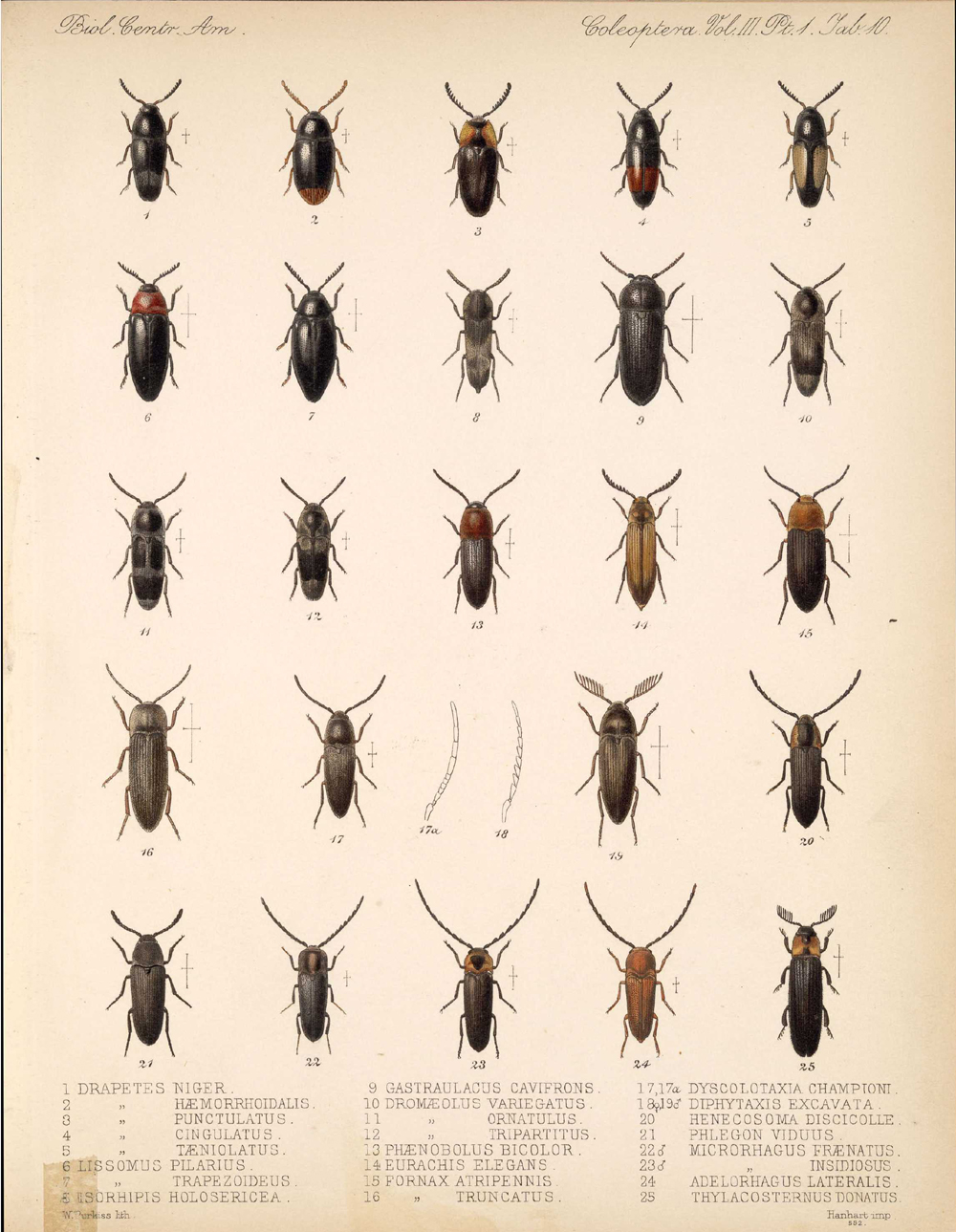 Beetles,  Image number:bca_12_03_01_722
