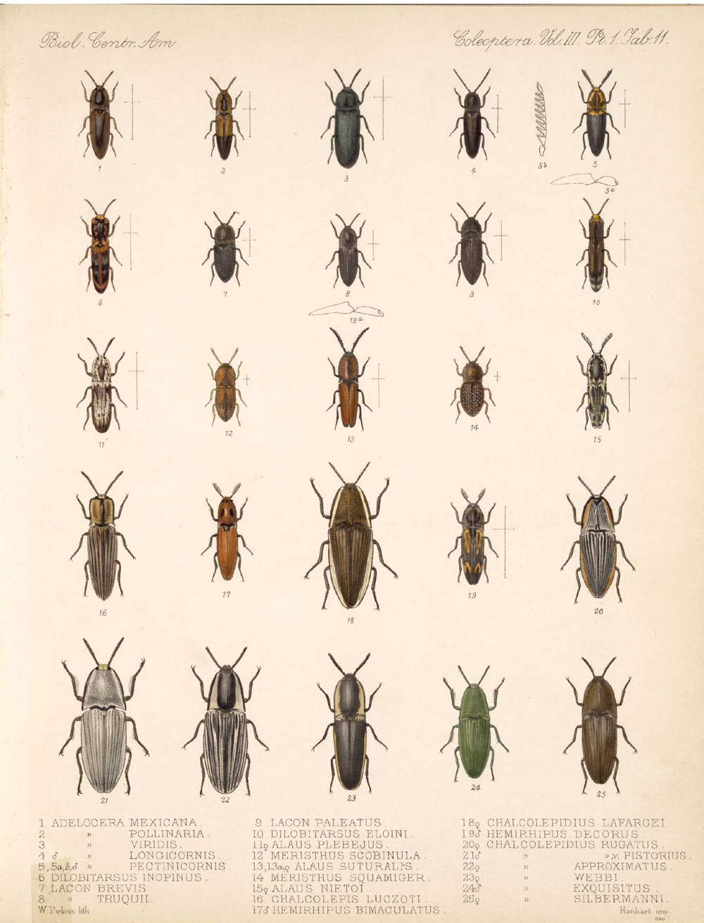 Beetles,  Image number:bca_12_03_01_723
