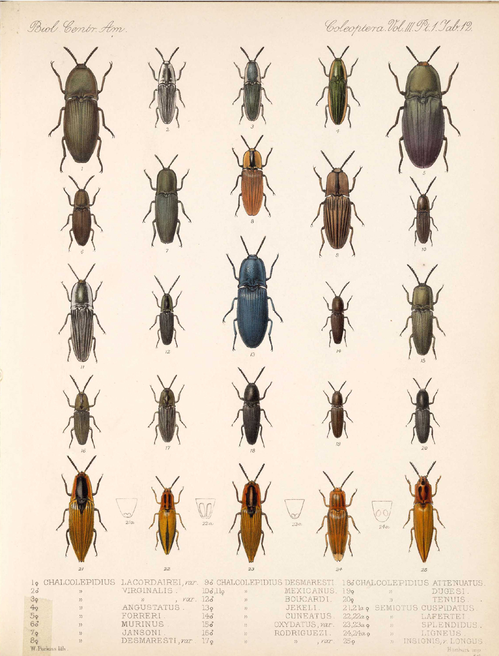 Beetles,  Image number:bca_12_03_01_724