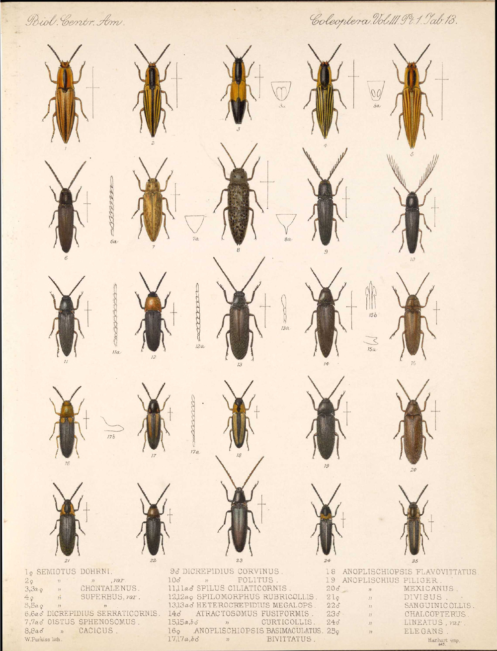 Beetles,  Image number:bca_12_03_01_725