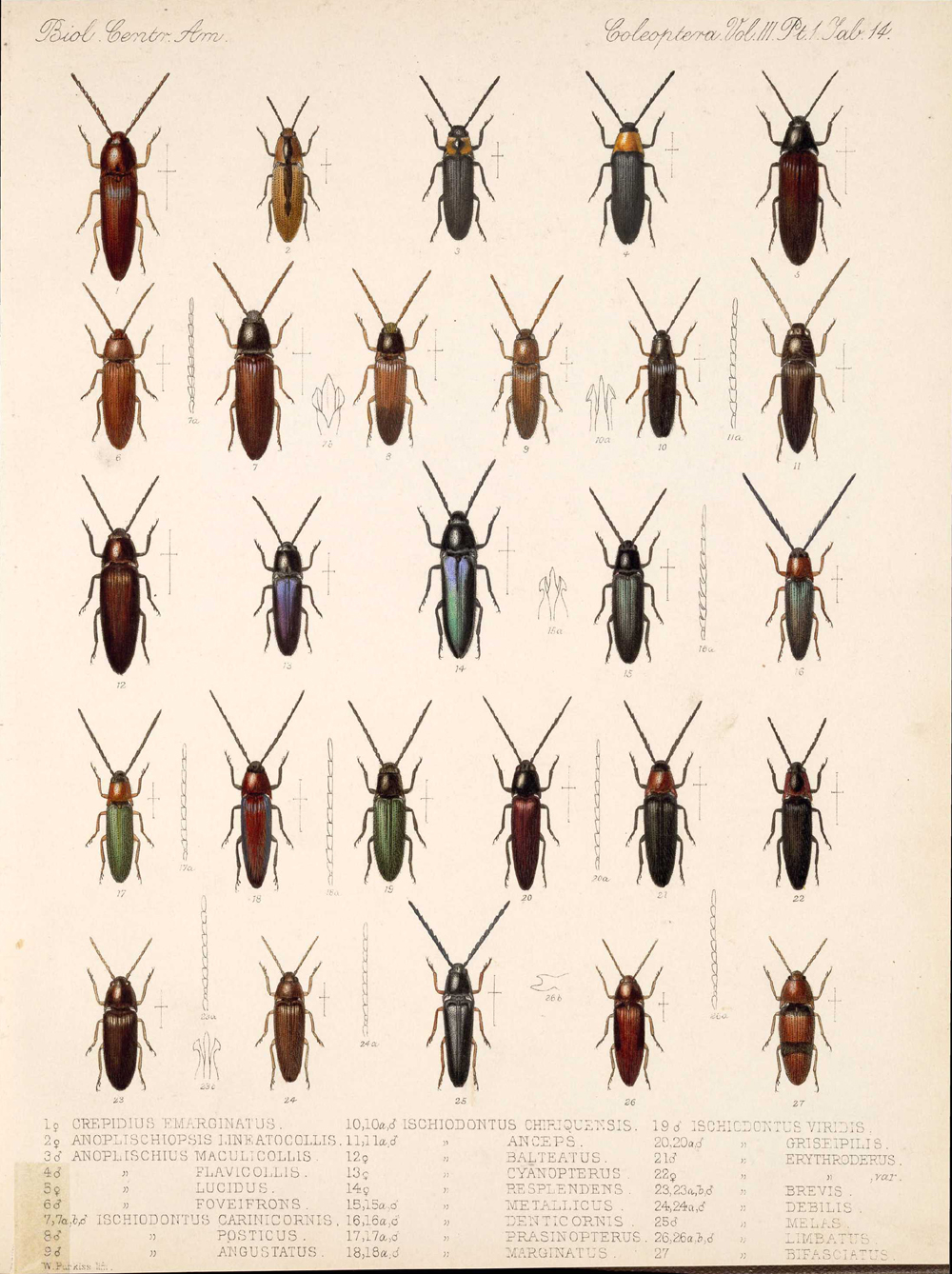 Beetles,  Image number:bca_12_03_01_726