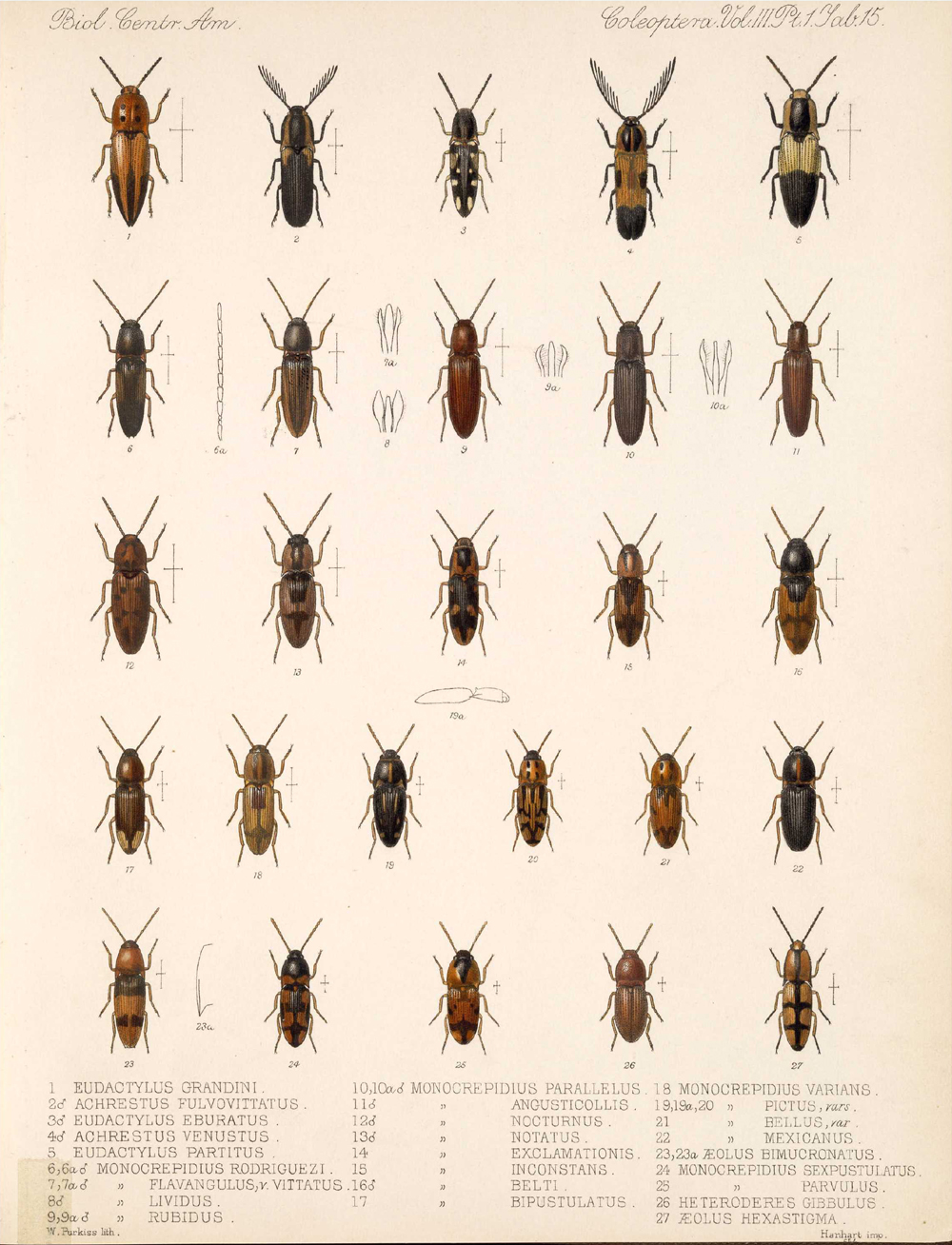 Beetles,  Image number:bca_12_03_01_727