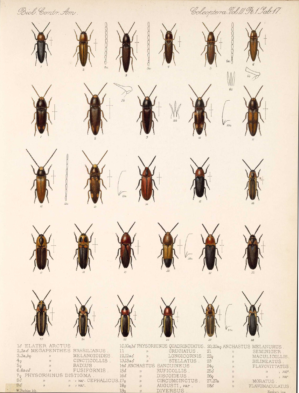Beetles,  Image number:bca_12_03_01_729