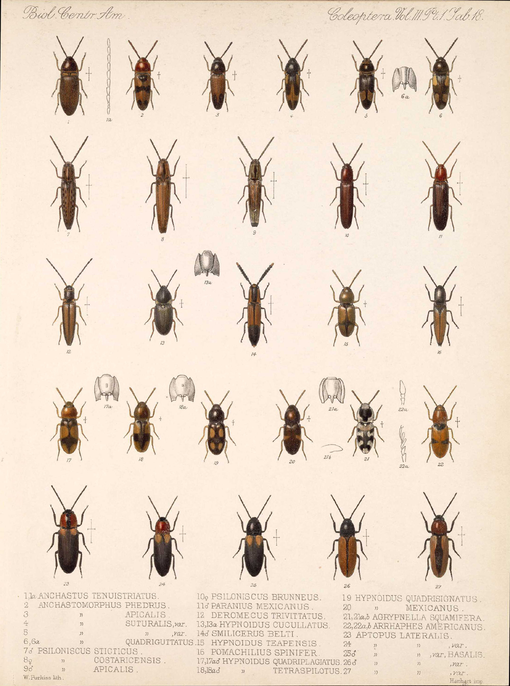 Beetles,  Image number:bca_12_03_01_730