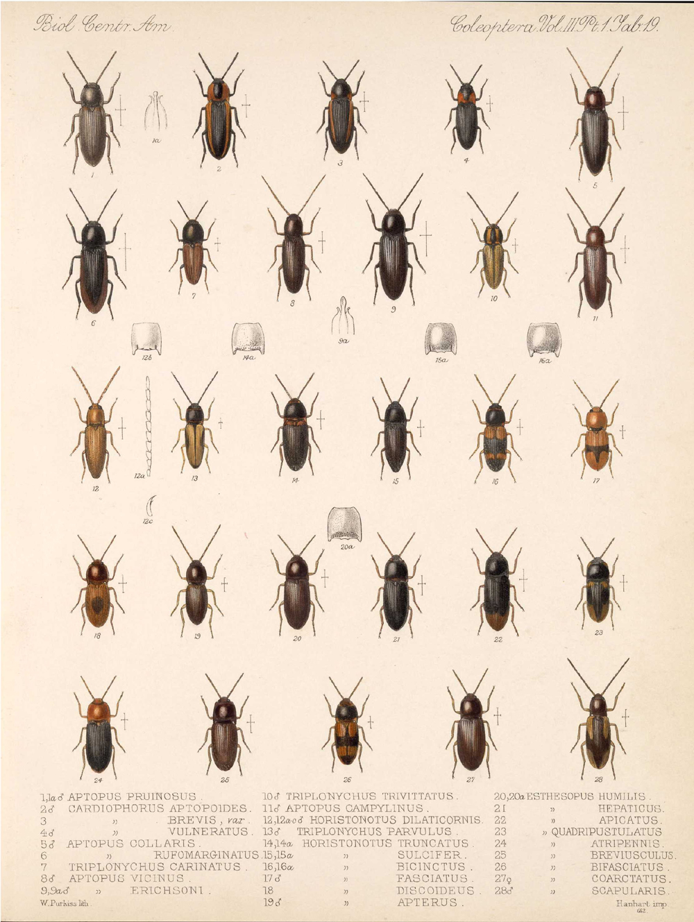 Beetles,  Image number:bca_12_03_01_731