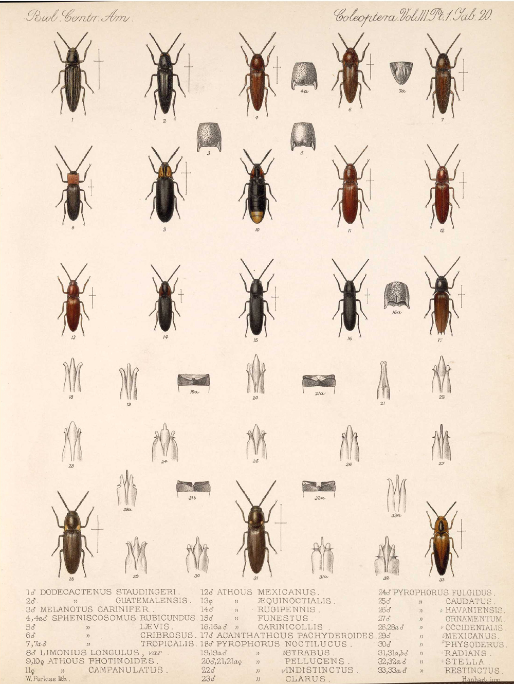 Beetles,  Image number:bca_12_03_01_732