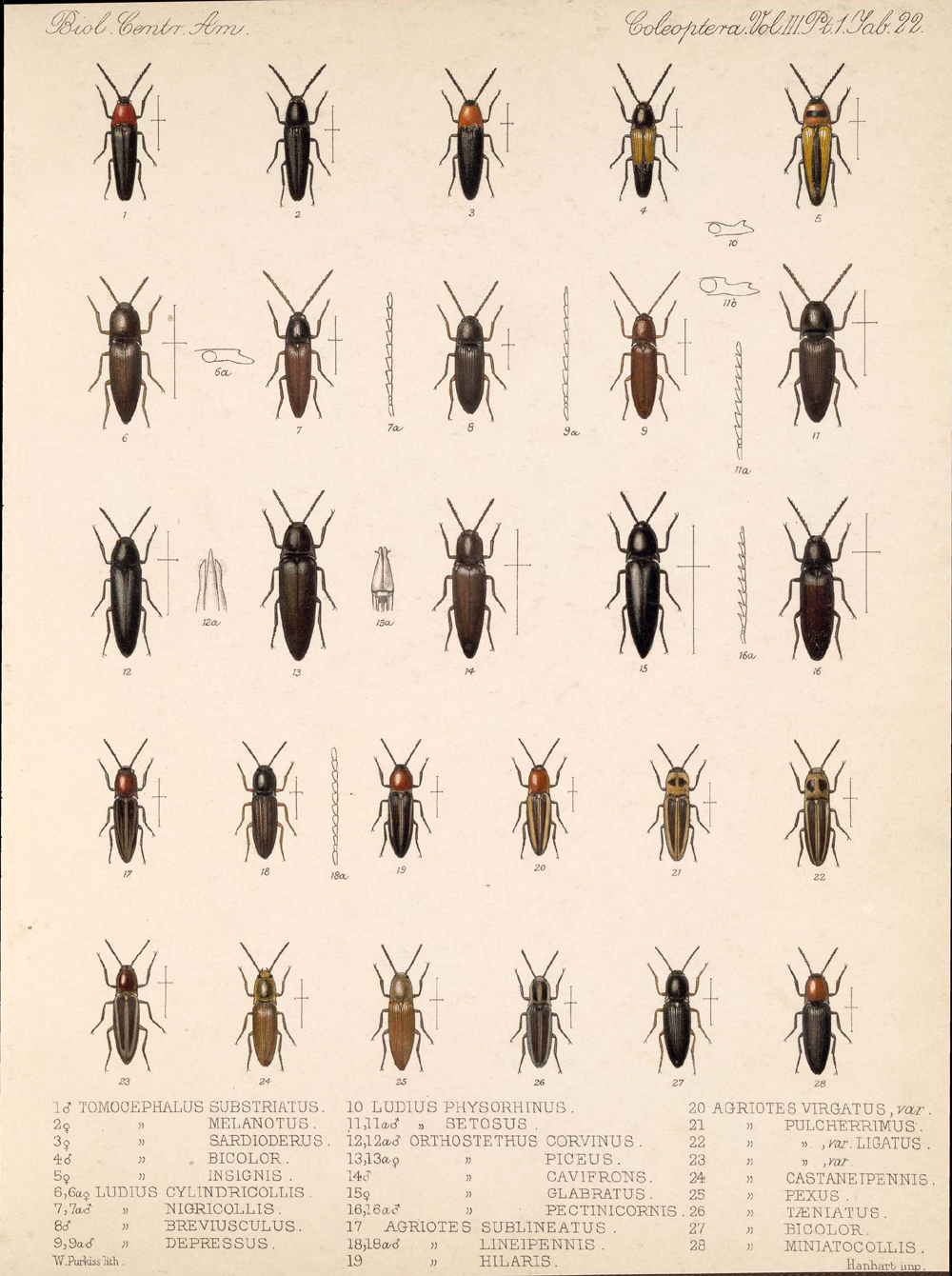 Beetles,  Image number:bca_12_03_01_734