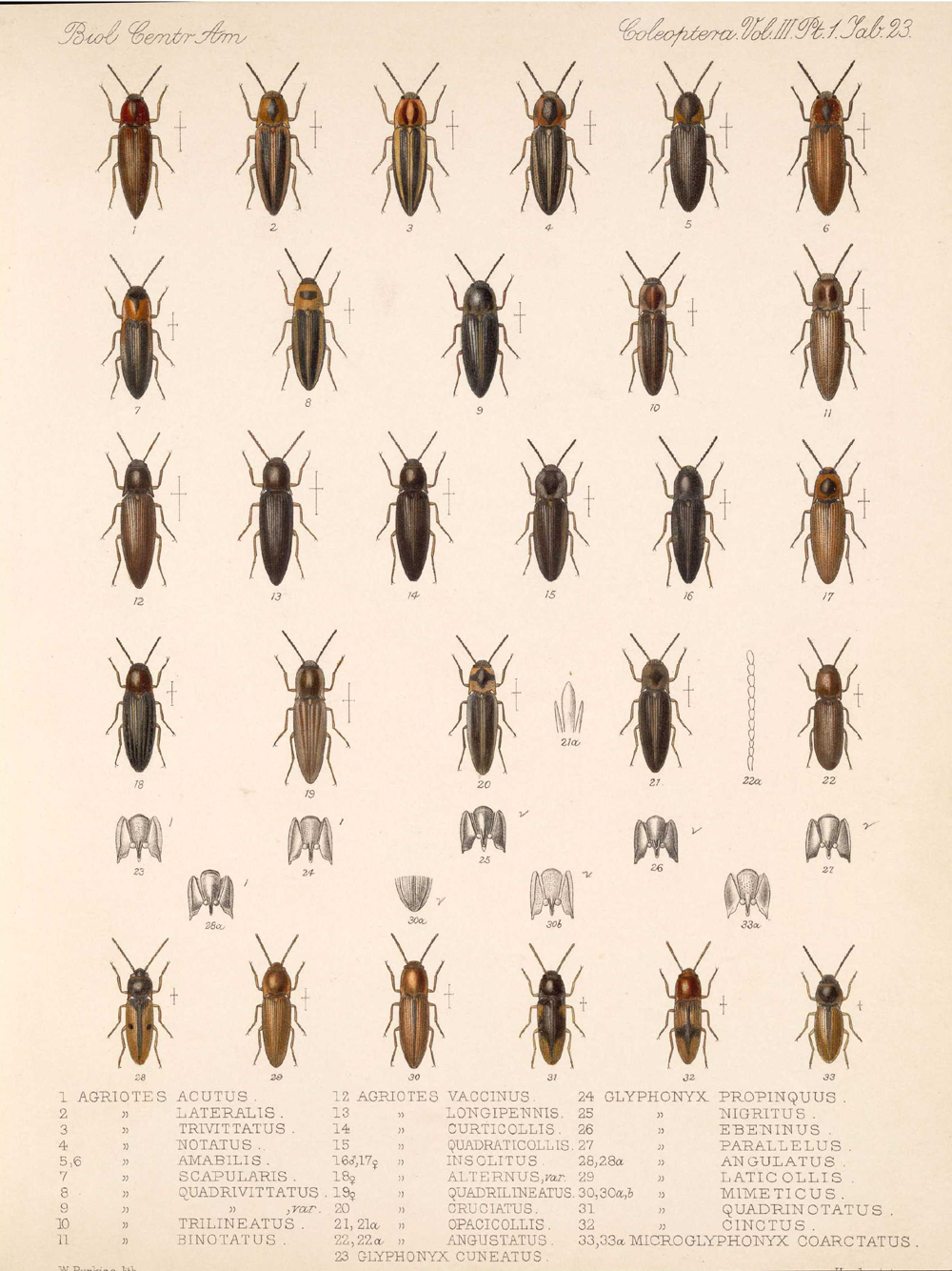 Beetles,  Image number:bca_12_03_01_735