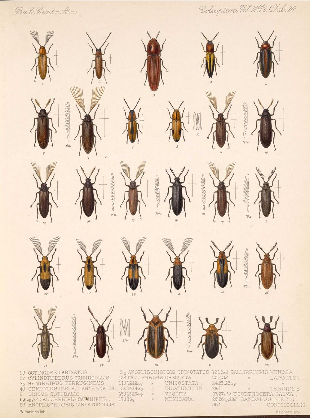 Beetles,  Image number:bca_12_03_01_736