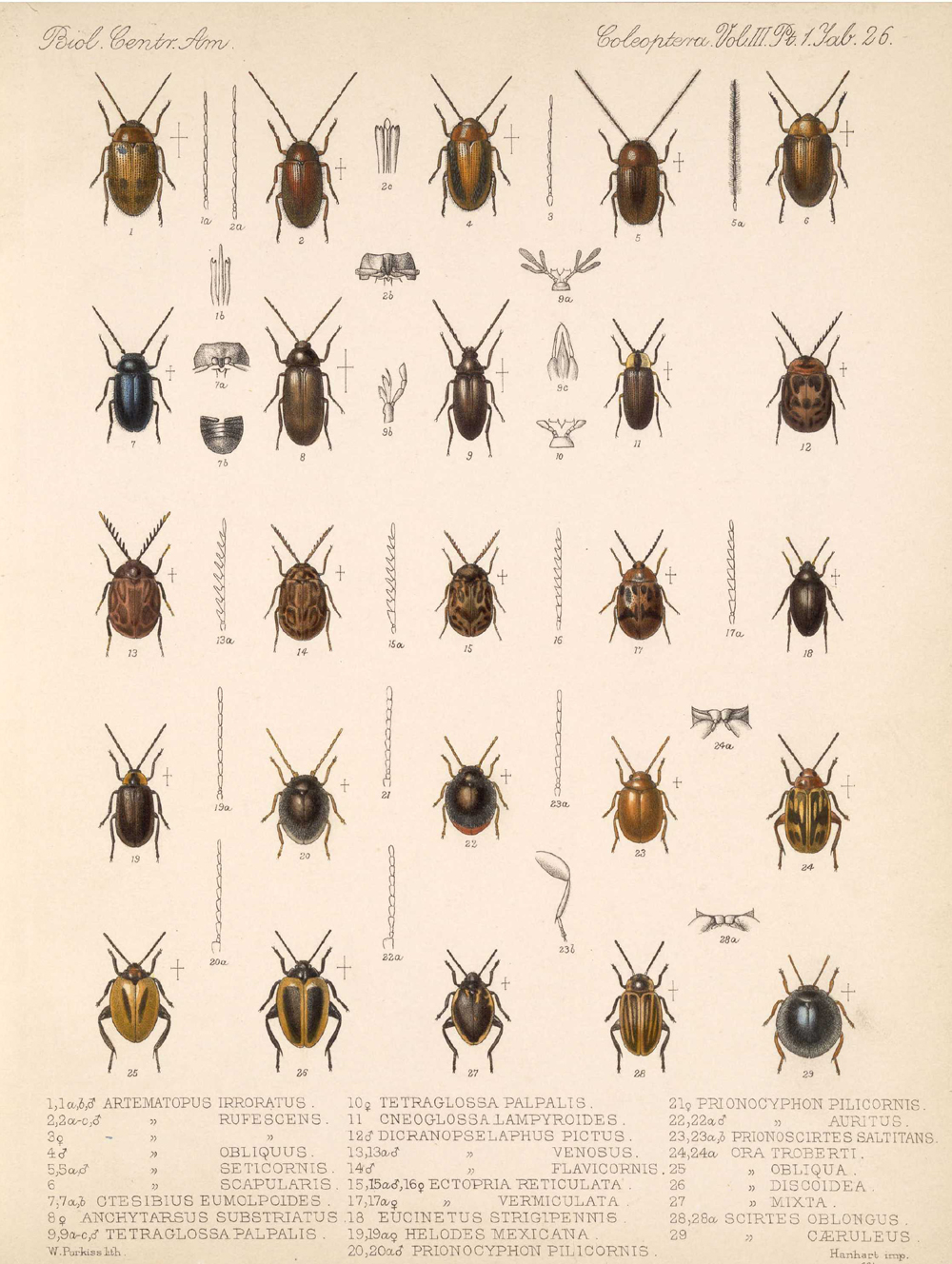 Beetles,  Image number:bca_12_03_01_738