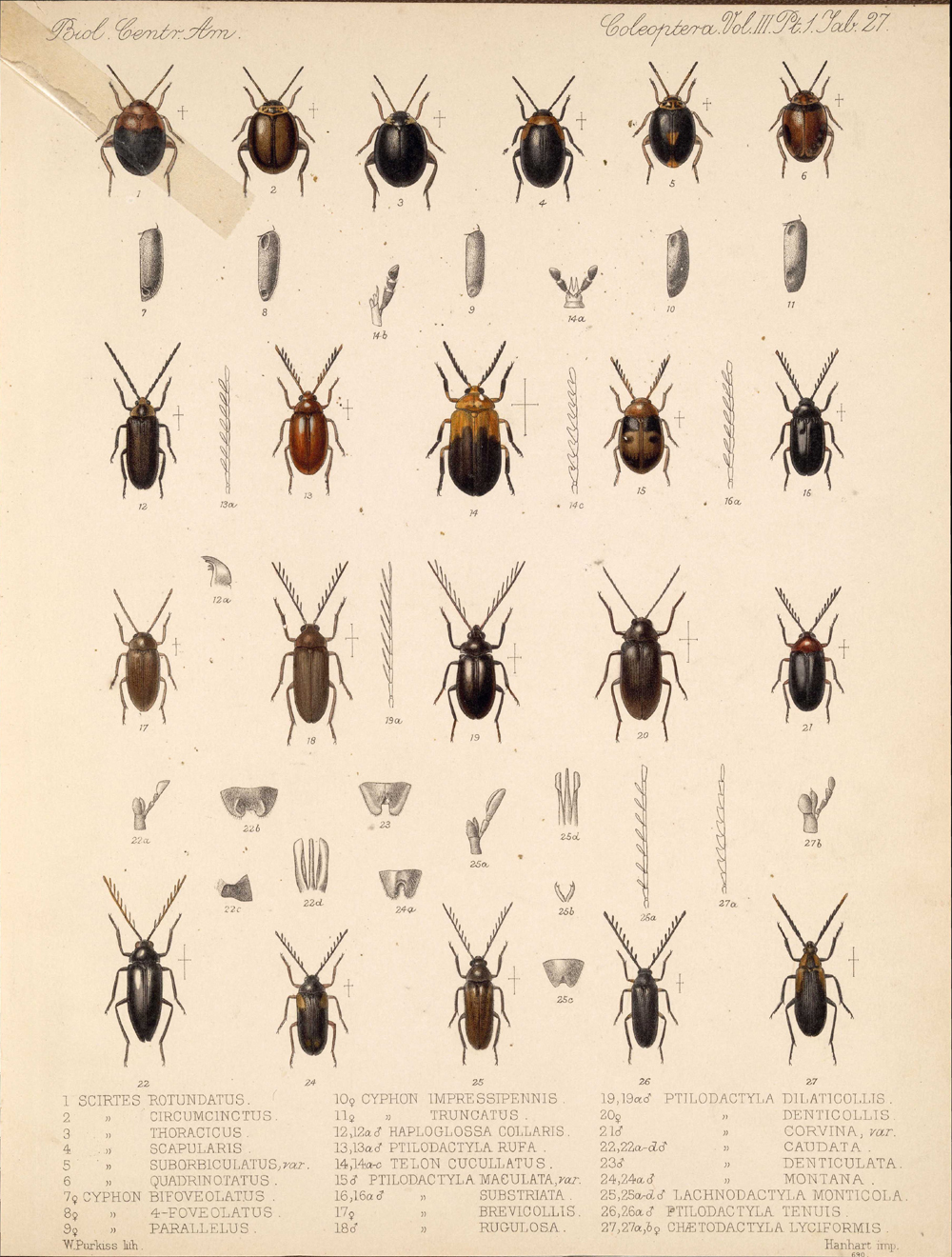 Beetles,  Image number:bca_12_03_01_739