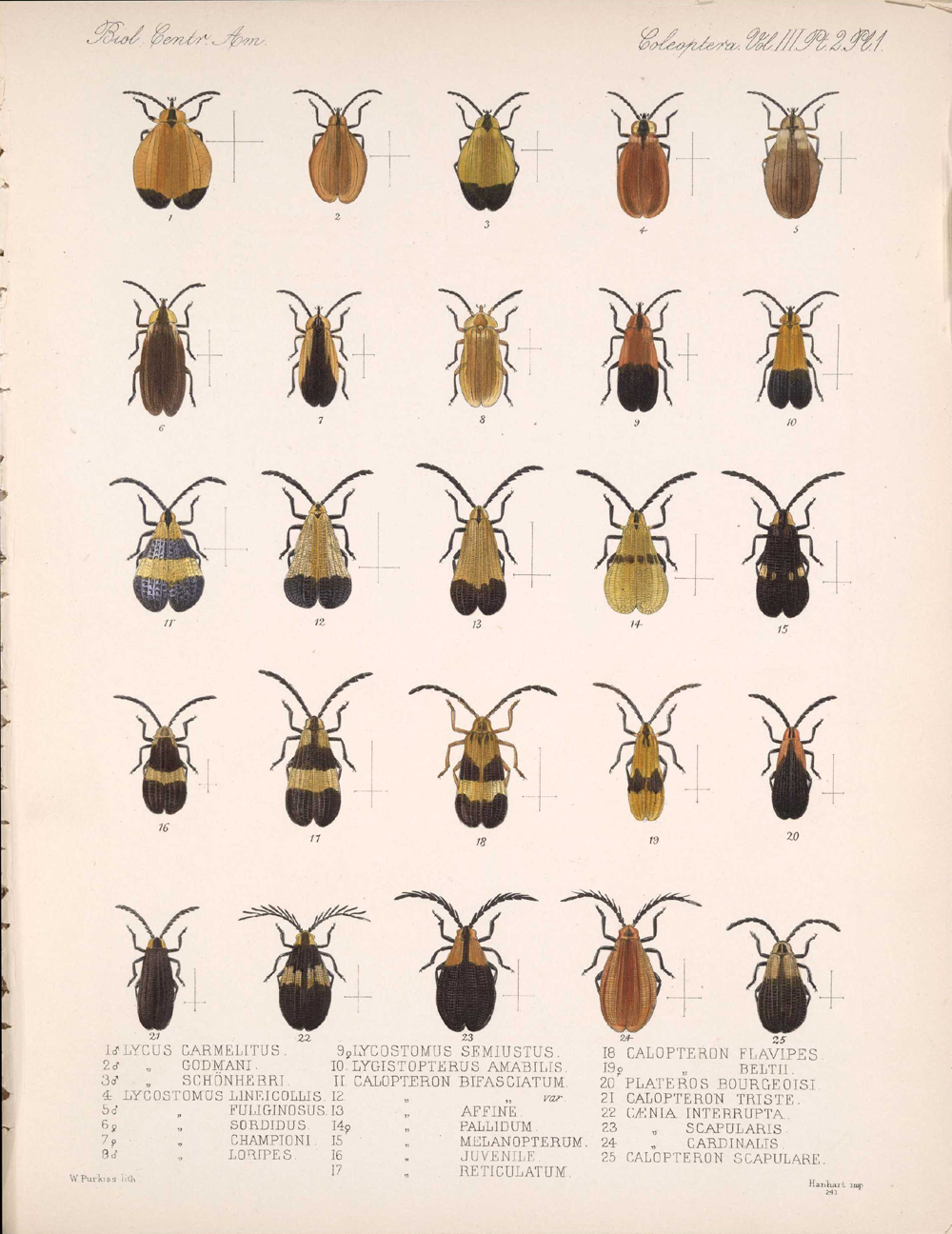 Beetles,  Image number:bca_12_03_02_391