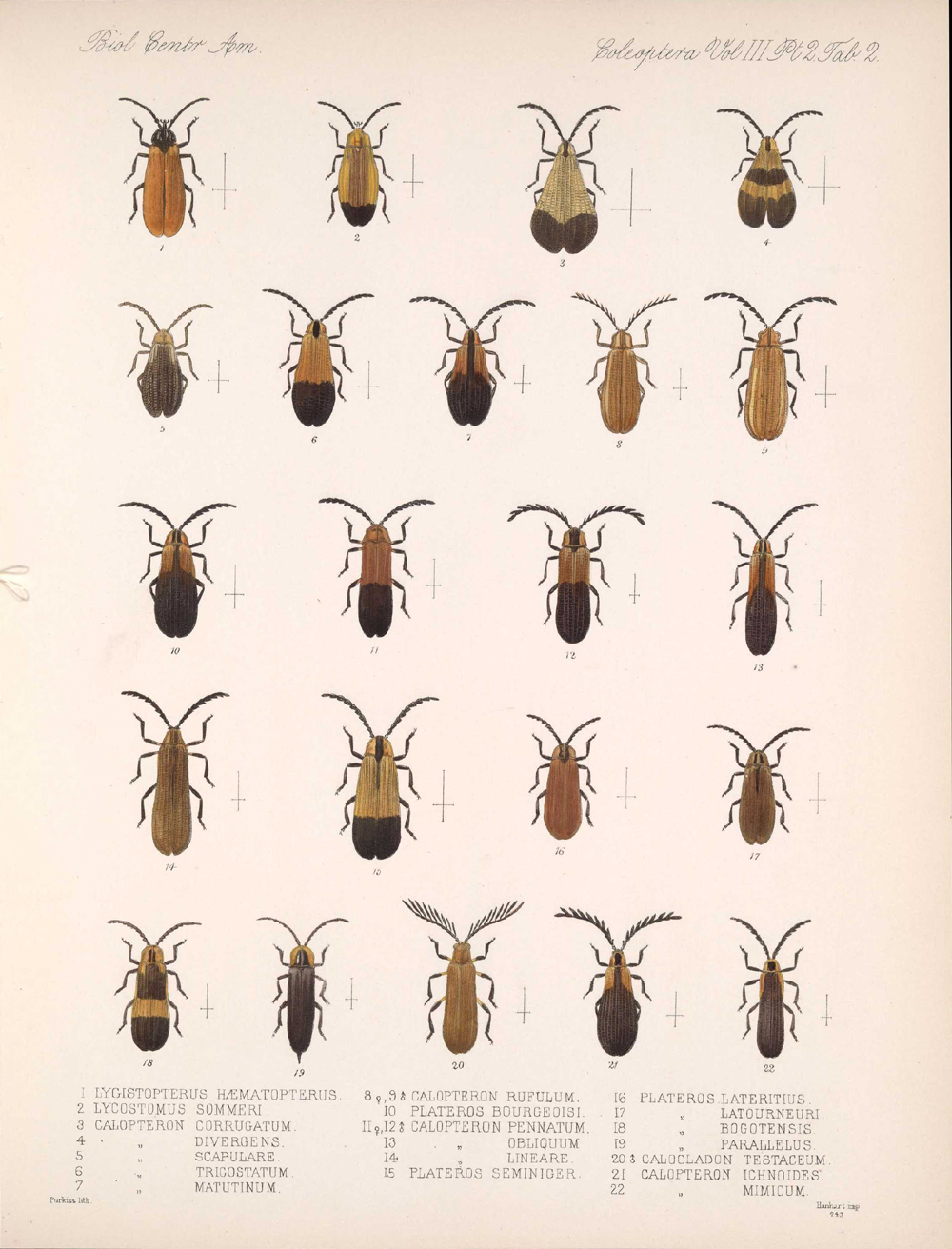 Beetles,  Image number:bca_12_03_02_392