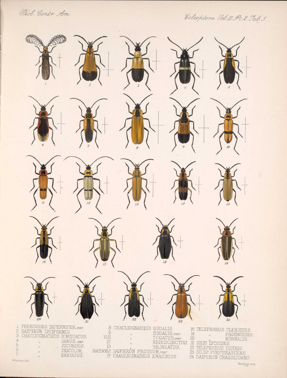 Beetles,  Image number:bca_12_03_02_395