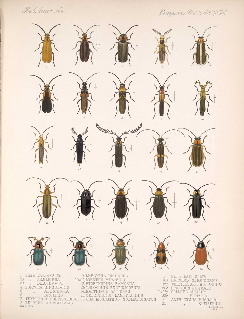 Beetles,  Image number:bca_12_03_02_396
