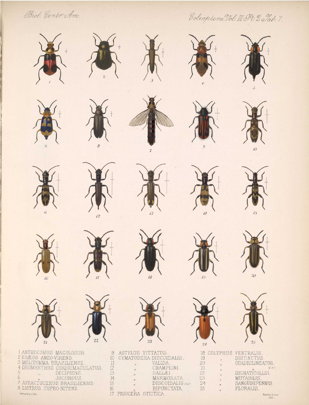 Beetles,  Image number:bca_12_03_02_397