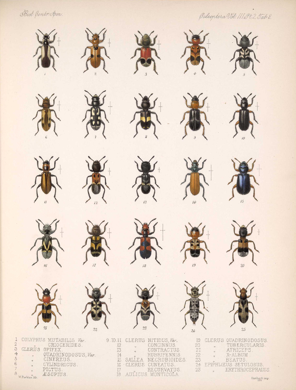 Beetles,  Image number:bca_12_03_02_398