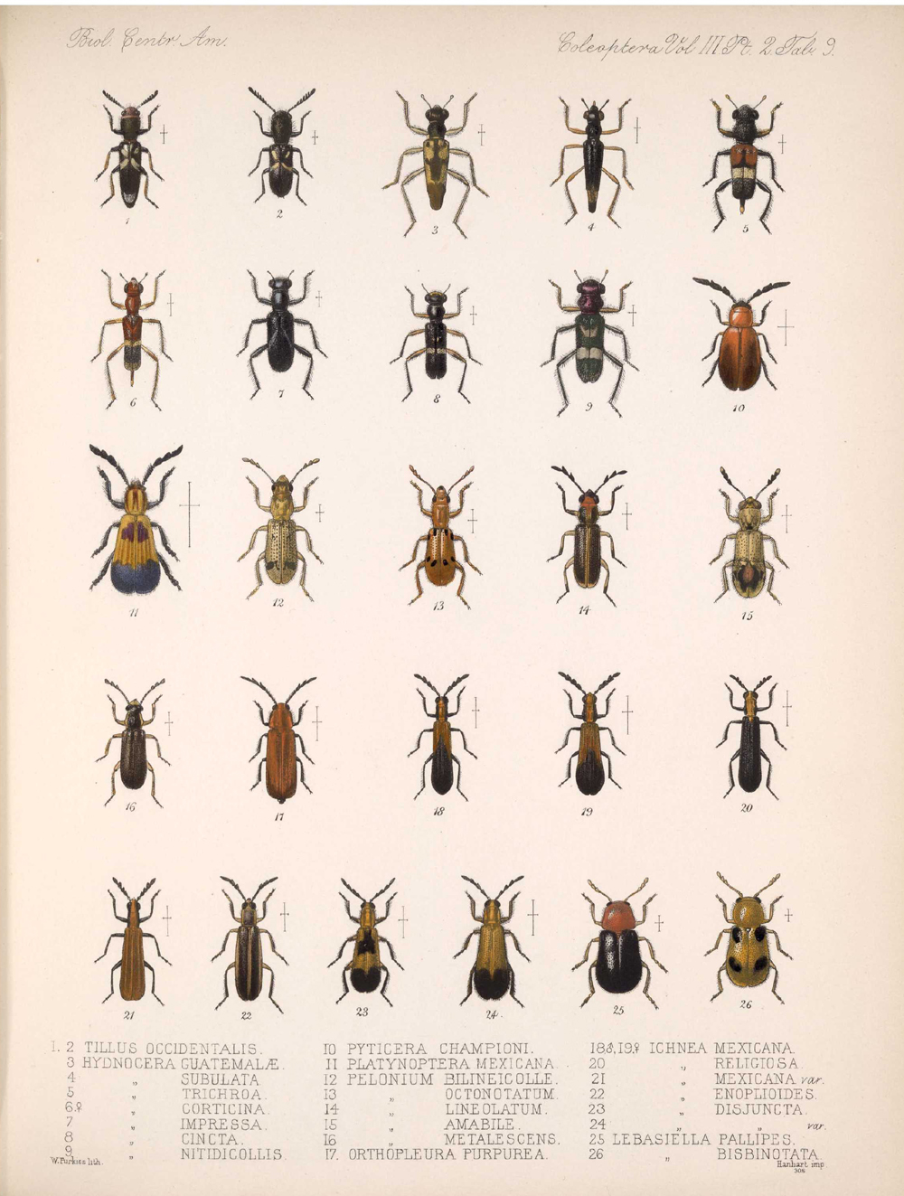 Beetles,  Image number:bca_12_03_02_399
