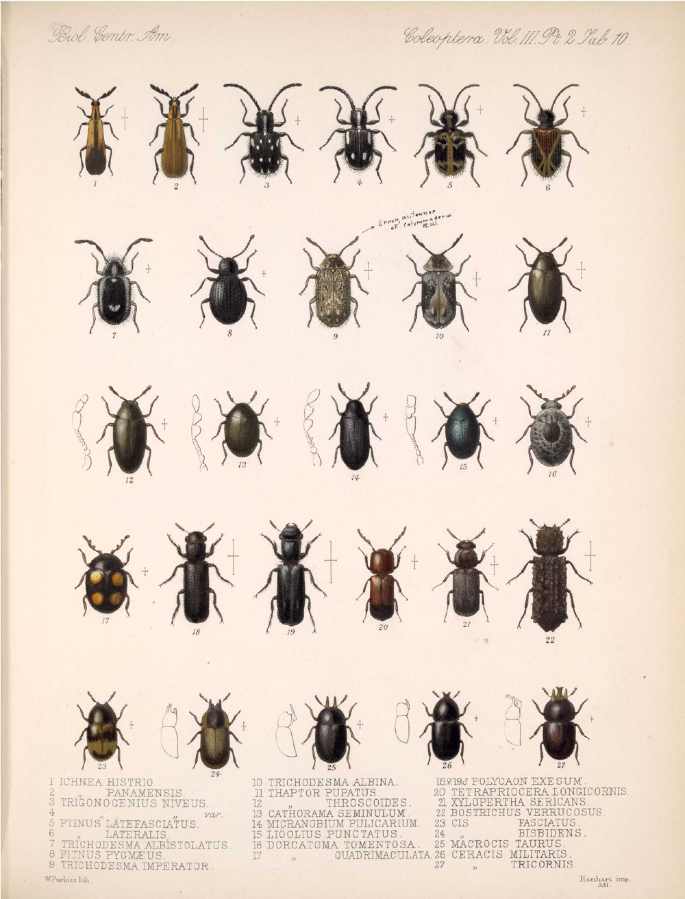 Beetles,  Image number:bca_12_03_02_400