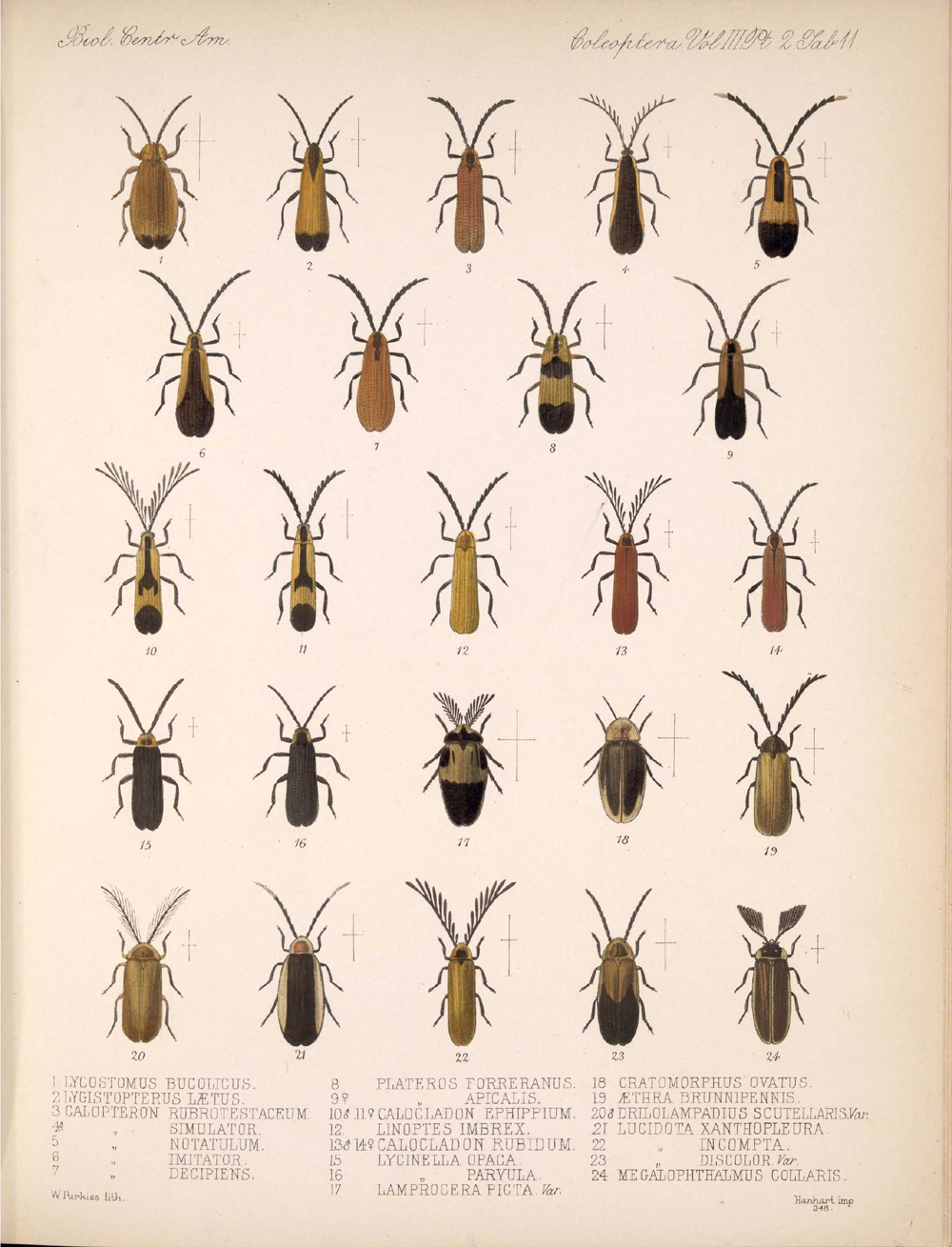 Beetles,  Image number:bca_12_03_02_401