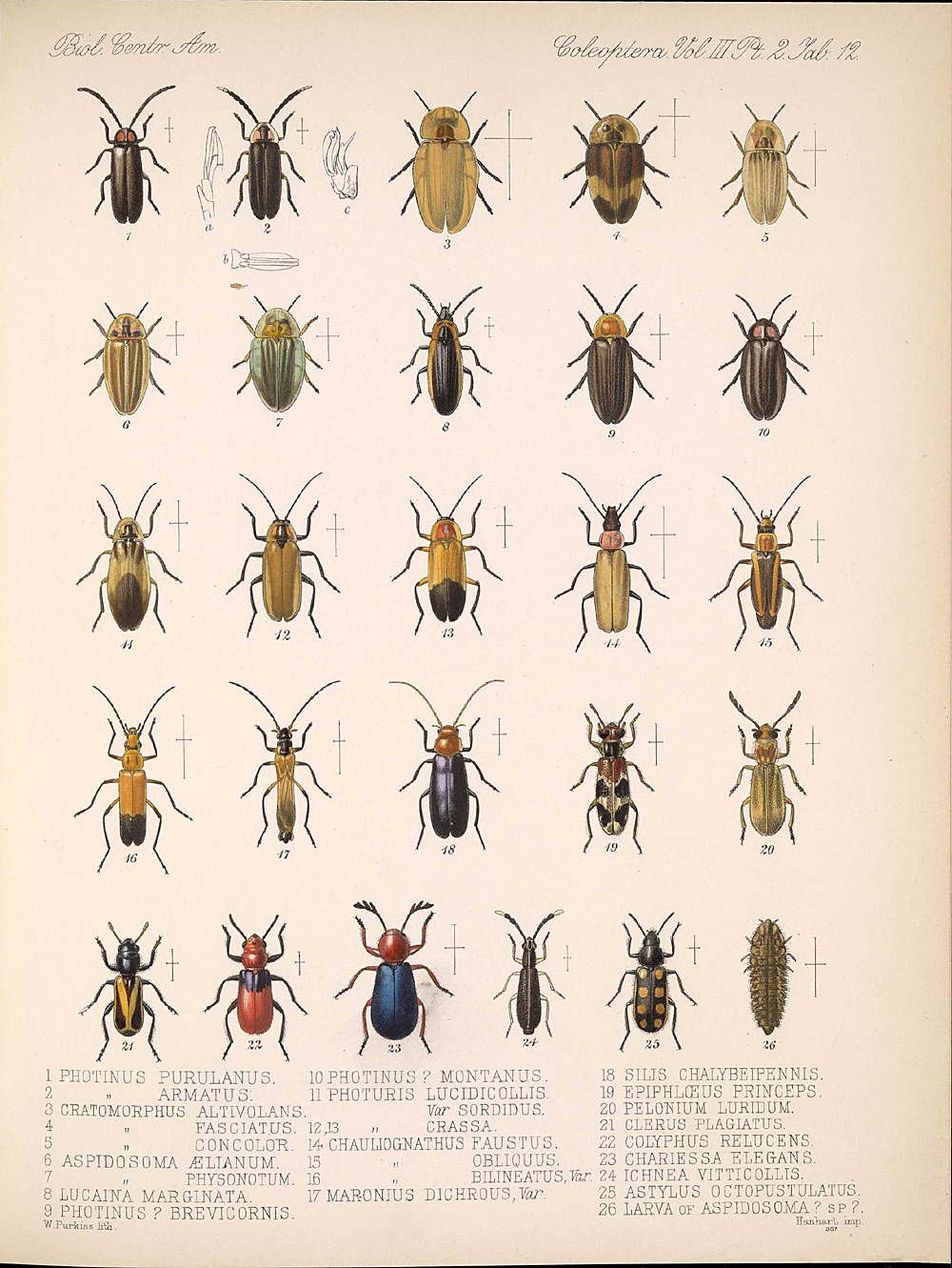 Beetles,  Image number:bca_12_03_02_402