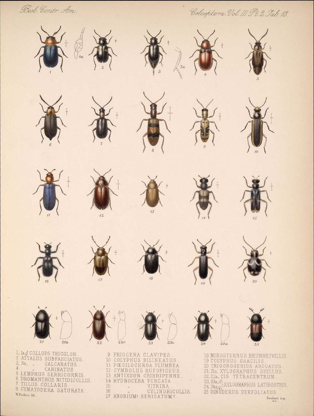 Beetles,  Image number:bca_12_03_02_403