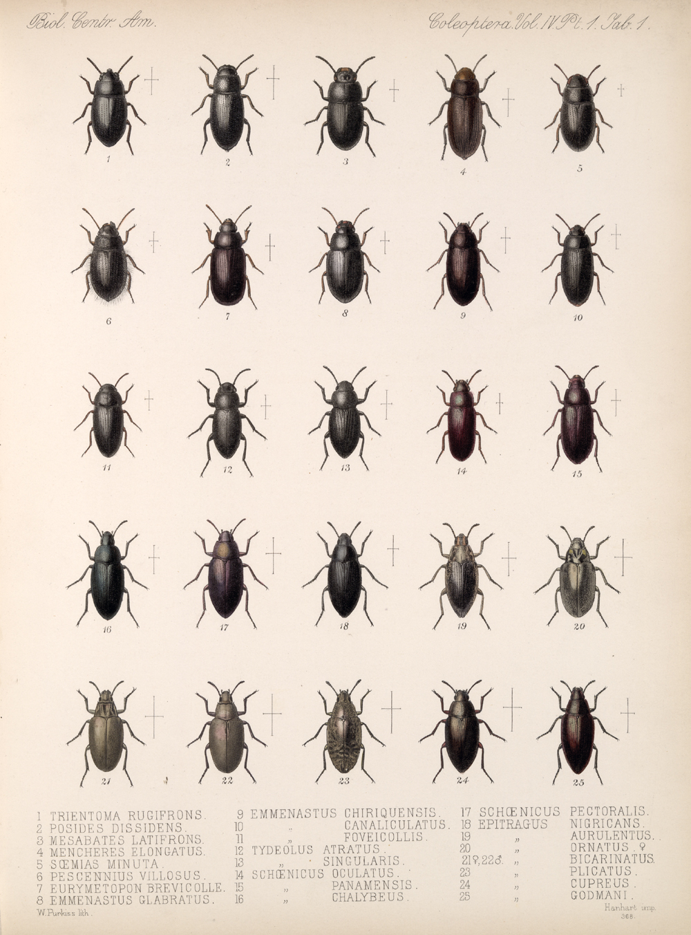 Beetles,  Image number:bca_12_04_01_613