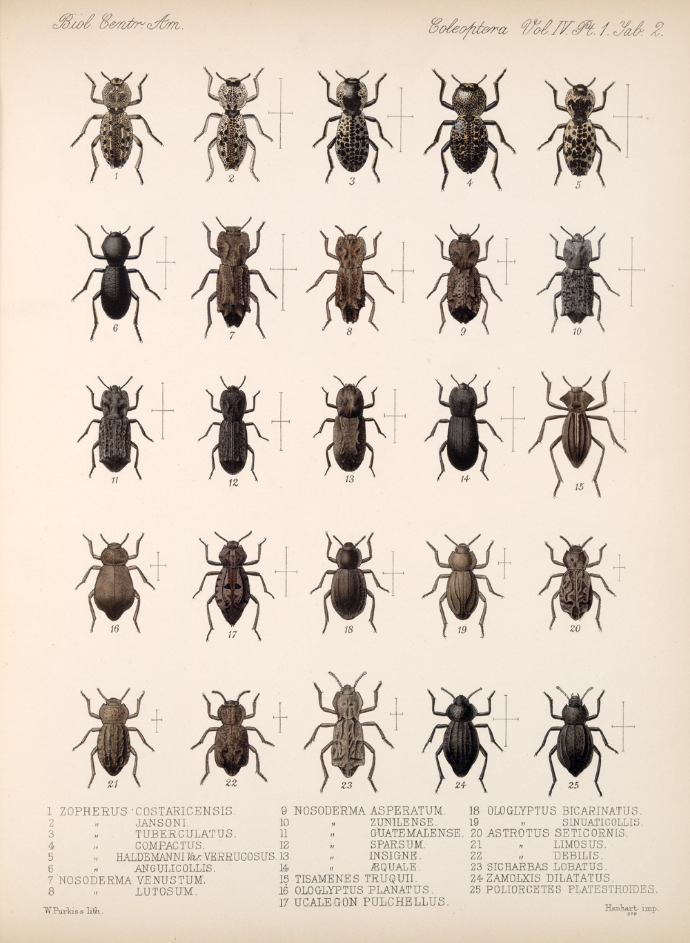 Beetles,  Image number:bca_12_04_01_614