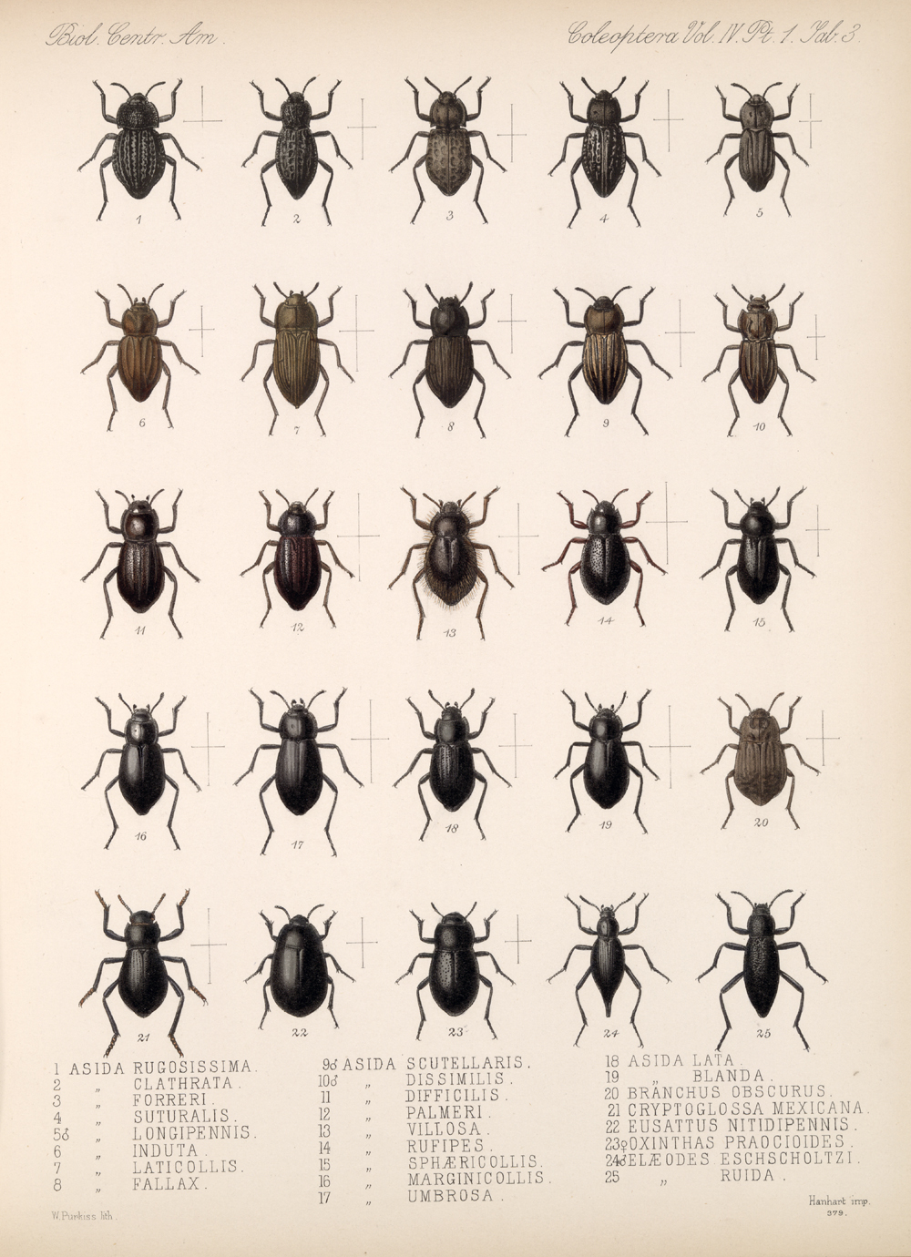 Beetles,  Image number:bca_12_04_01_615