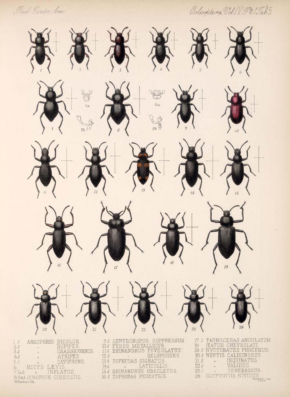 Beetles,  Image number:bca_12_04_01_617