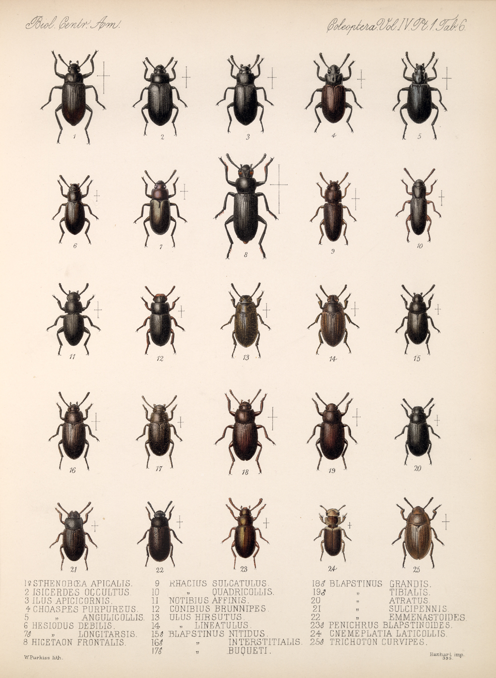 Beetles,  Image number:bca_12_04_01_618