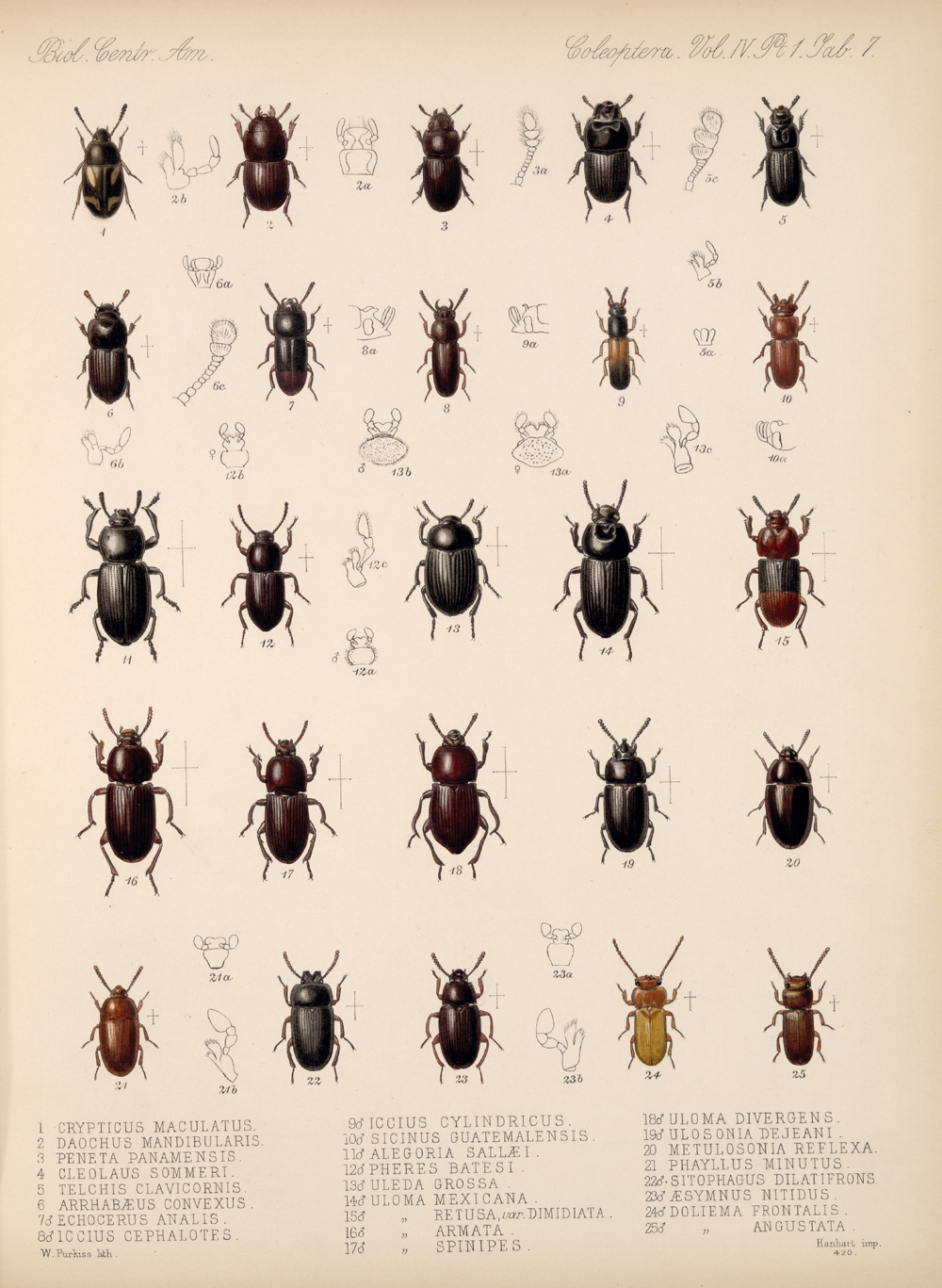 Beetles,  Image number:bca_12_04_01_619