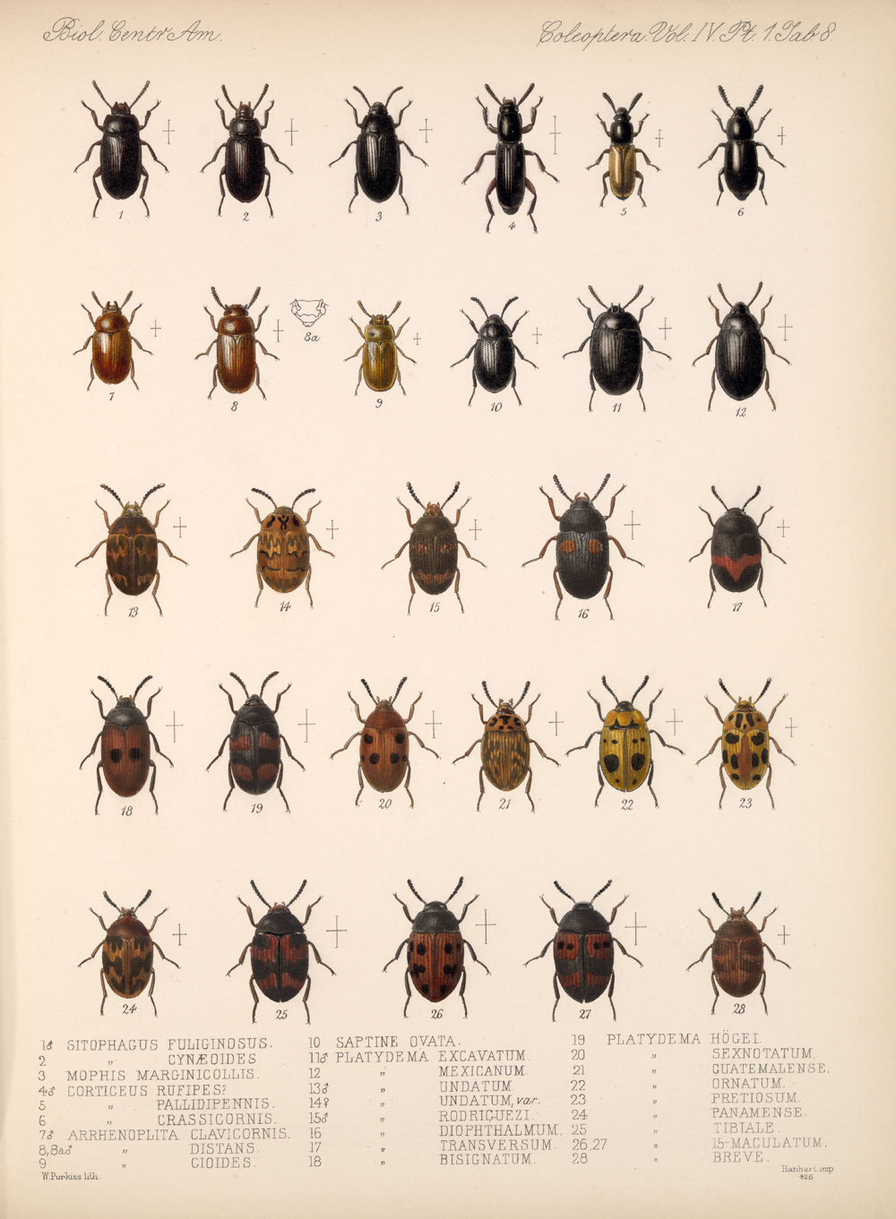 Beetles,  Image number:bca_12_04_01_620