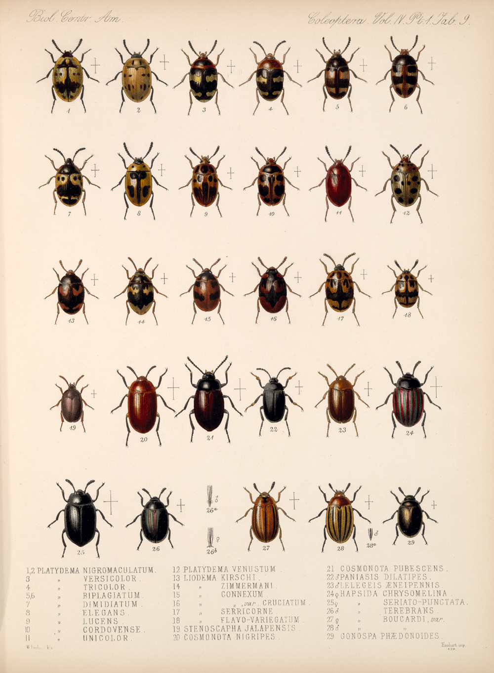 Beetles,  Image number:bca_12_04_01_621