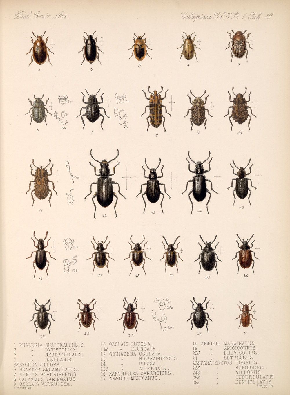 Beetles,  Image number:bca_12_04_01_622
