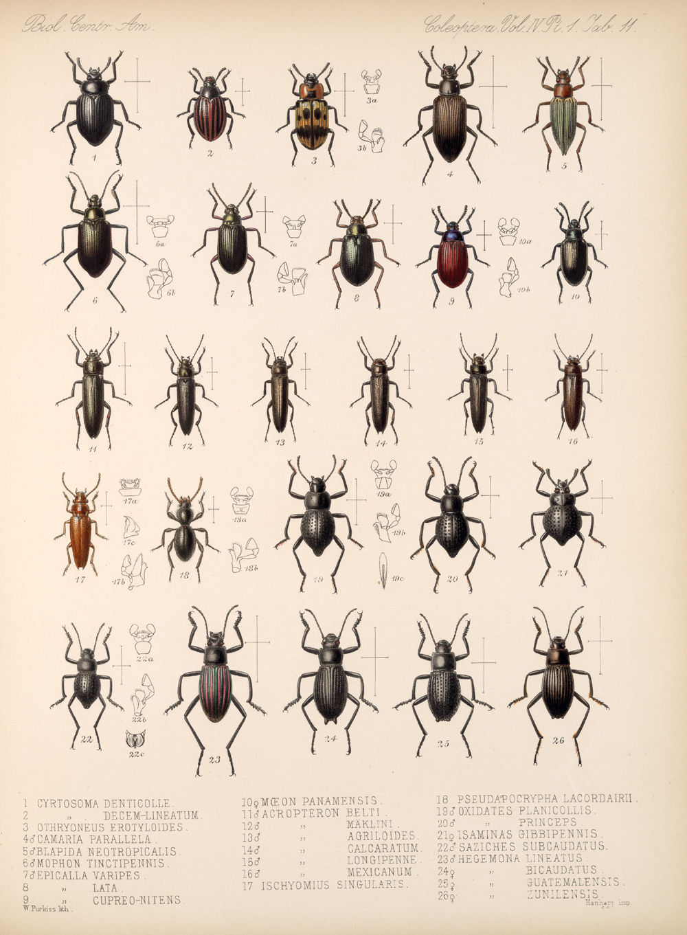 Beetles,  Image number:bca_12_04_01_623