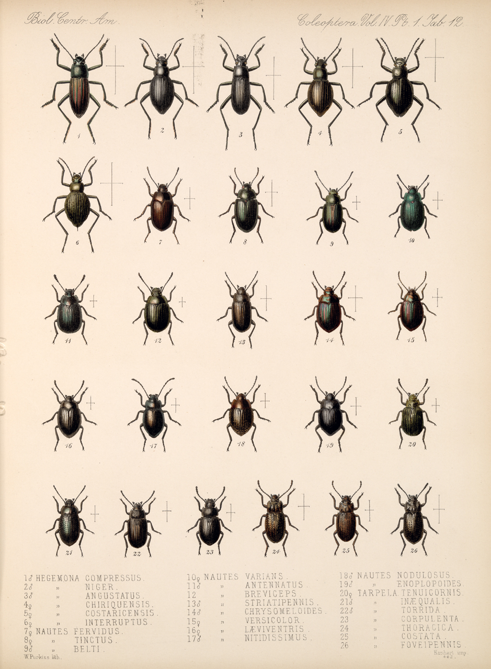 Beetles,  Image number:bca_12_04_01_624
