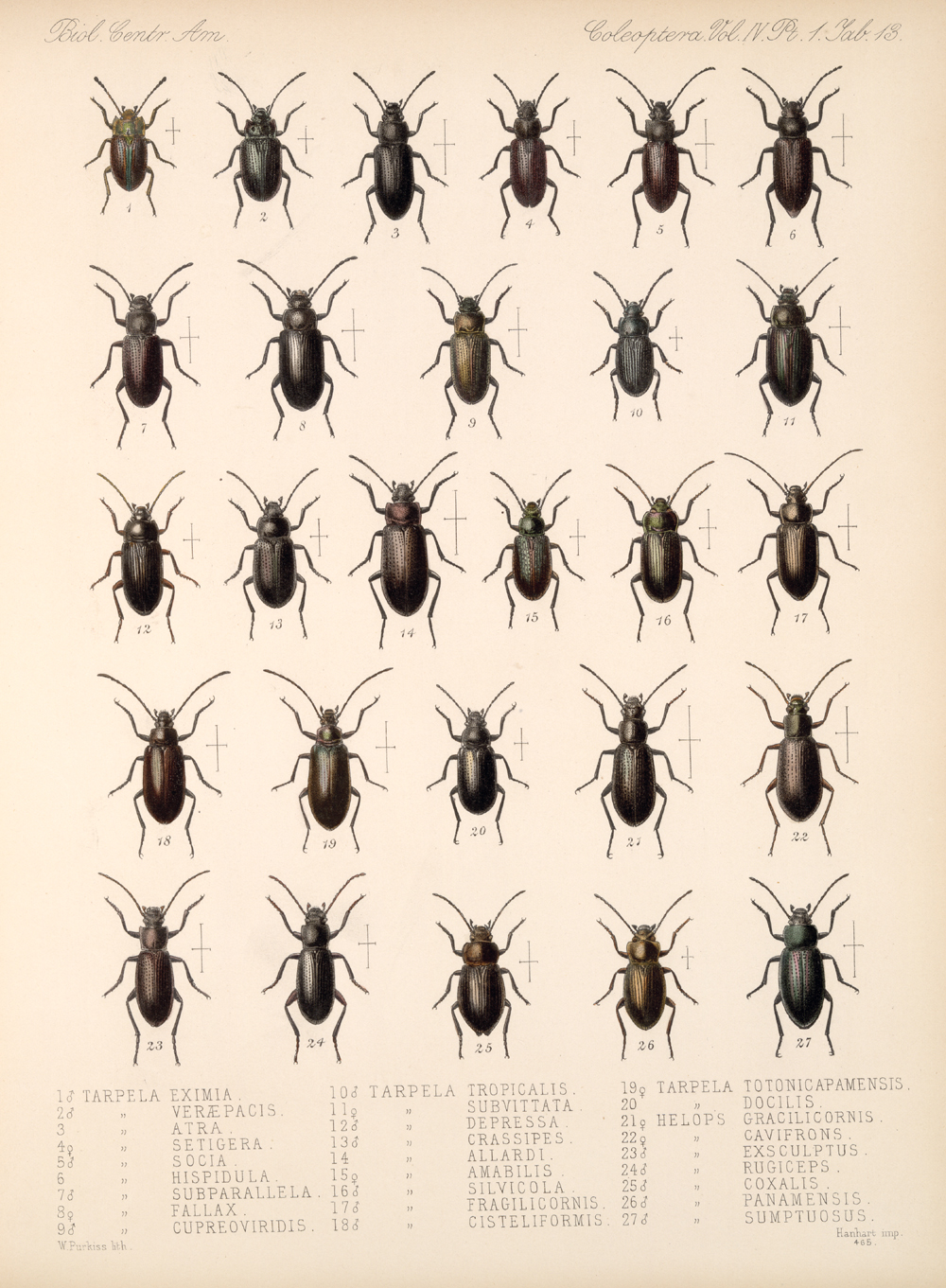 Beetles,  Image number:bca_12_04_01_625