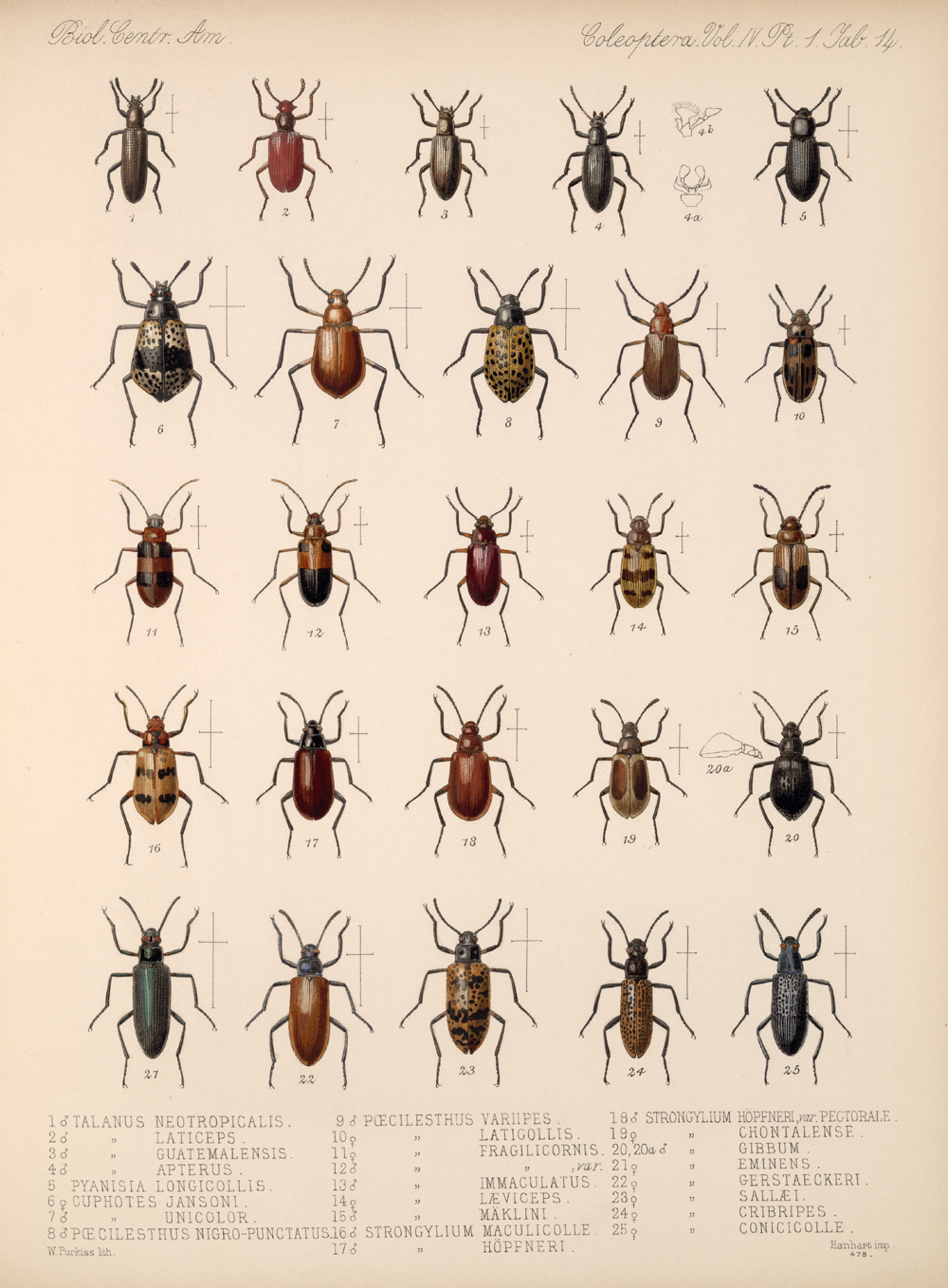 Beetles,  Image number:bca_12_04_01_626