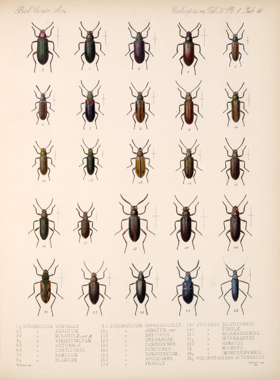 Beetles,  Image number:bca_12_04_01_628