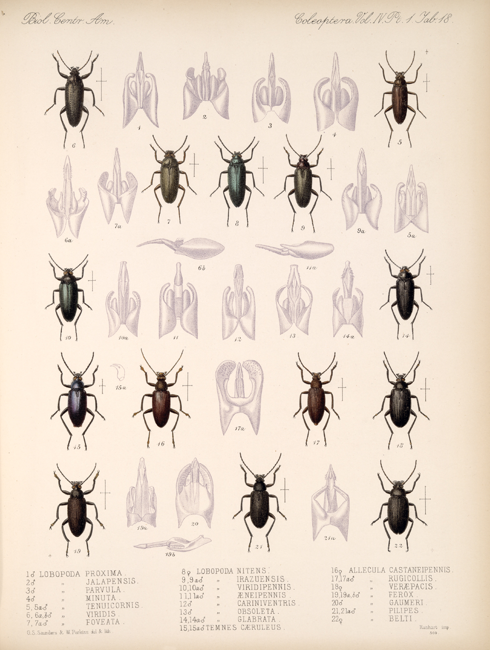 Beetles,  Image number:bca_12_04_01_630